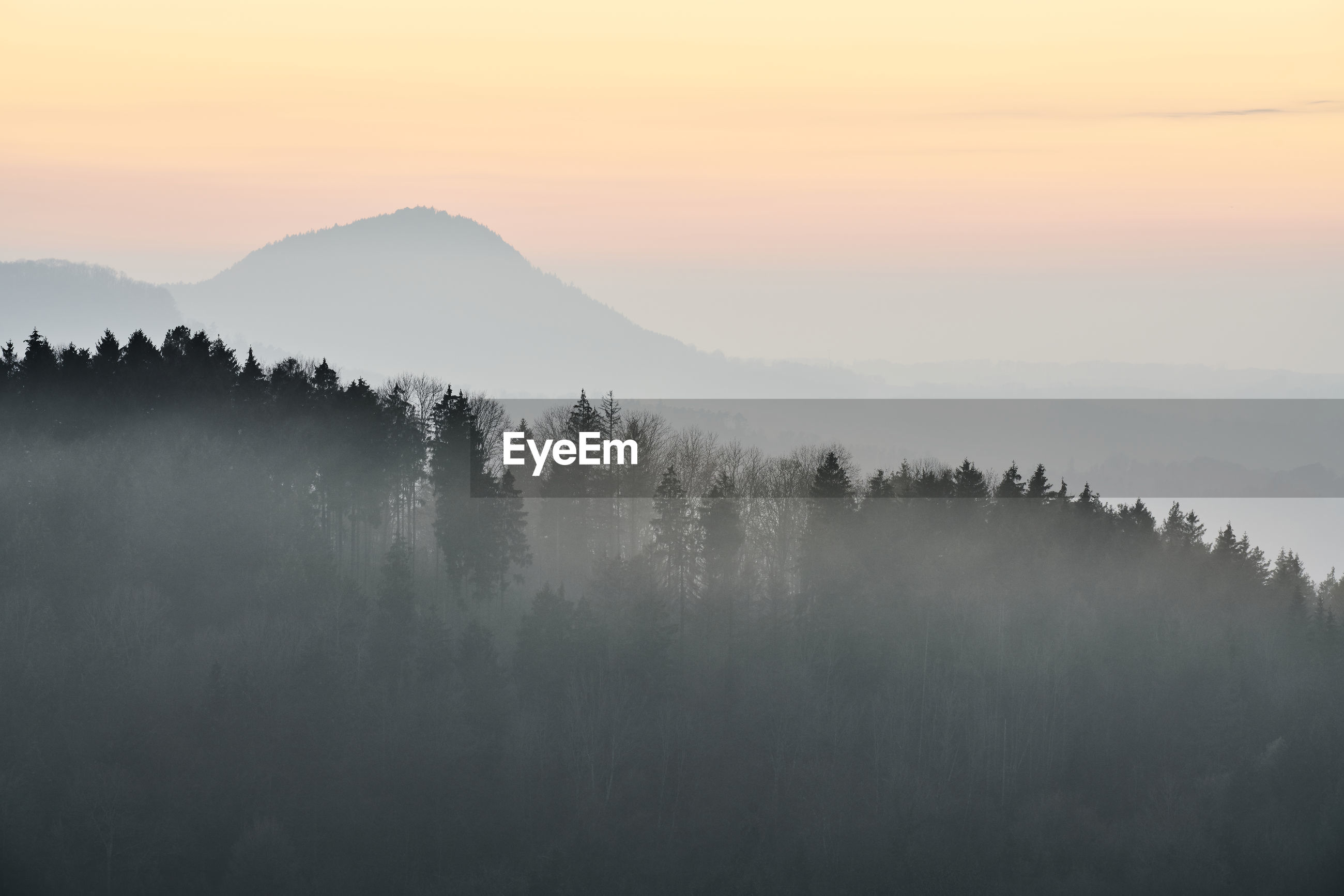 SCENIC VIEW OF TREES ON MOUNTAIN AGAINST SKY AT SUNSET