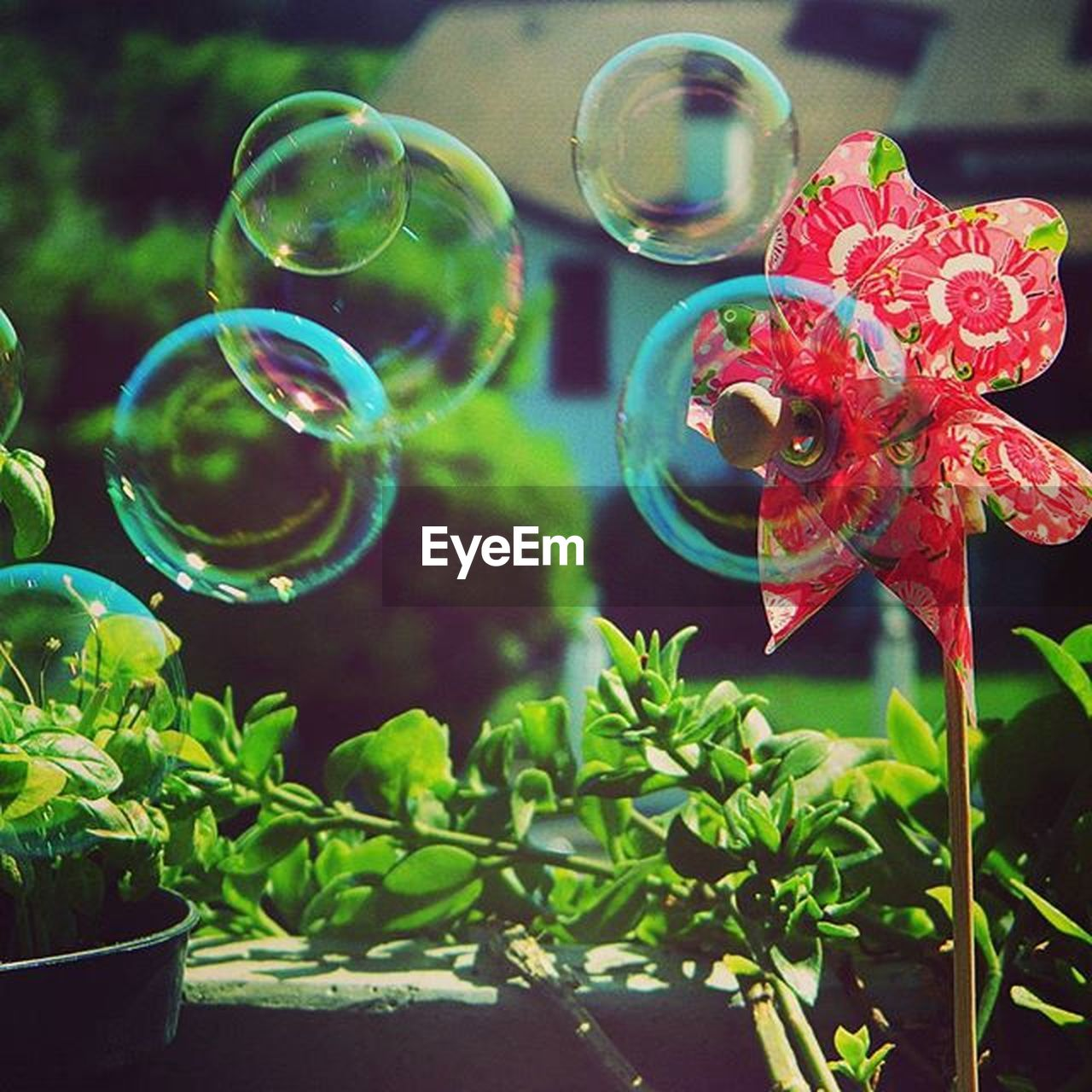 fragility, plant, growth, bubble, nature, no people, beauty in nature, day, red, bubble wand, outdoors, flower, close-up, water, freshness
