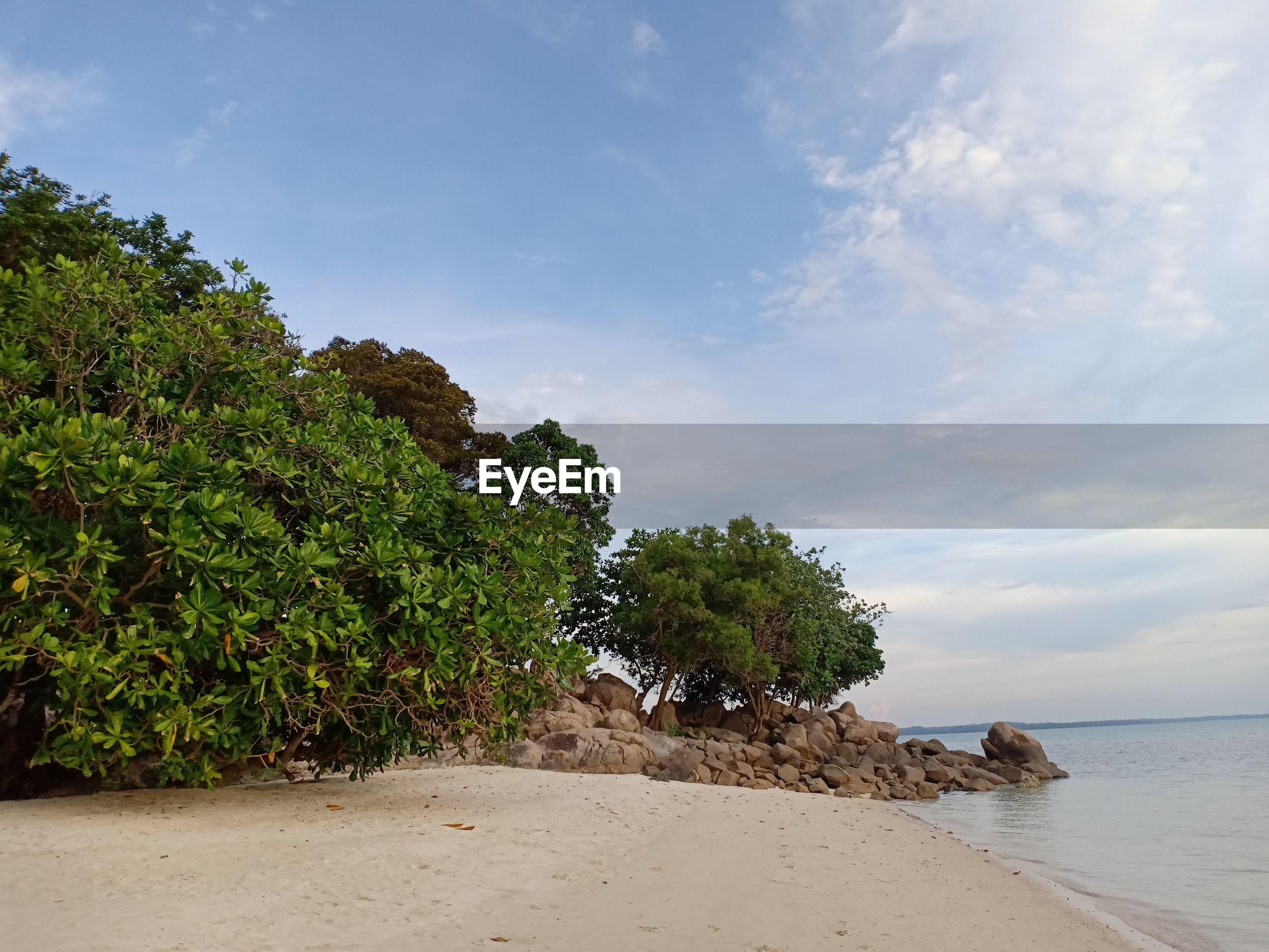 TREES GROWING ON BEACH AGAINST SKY