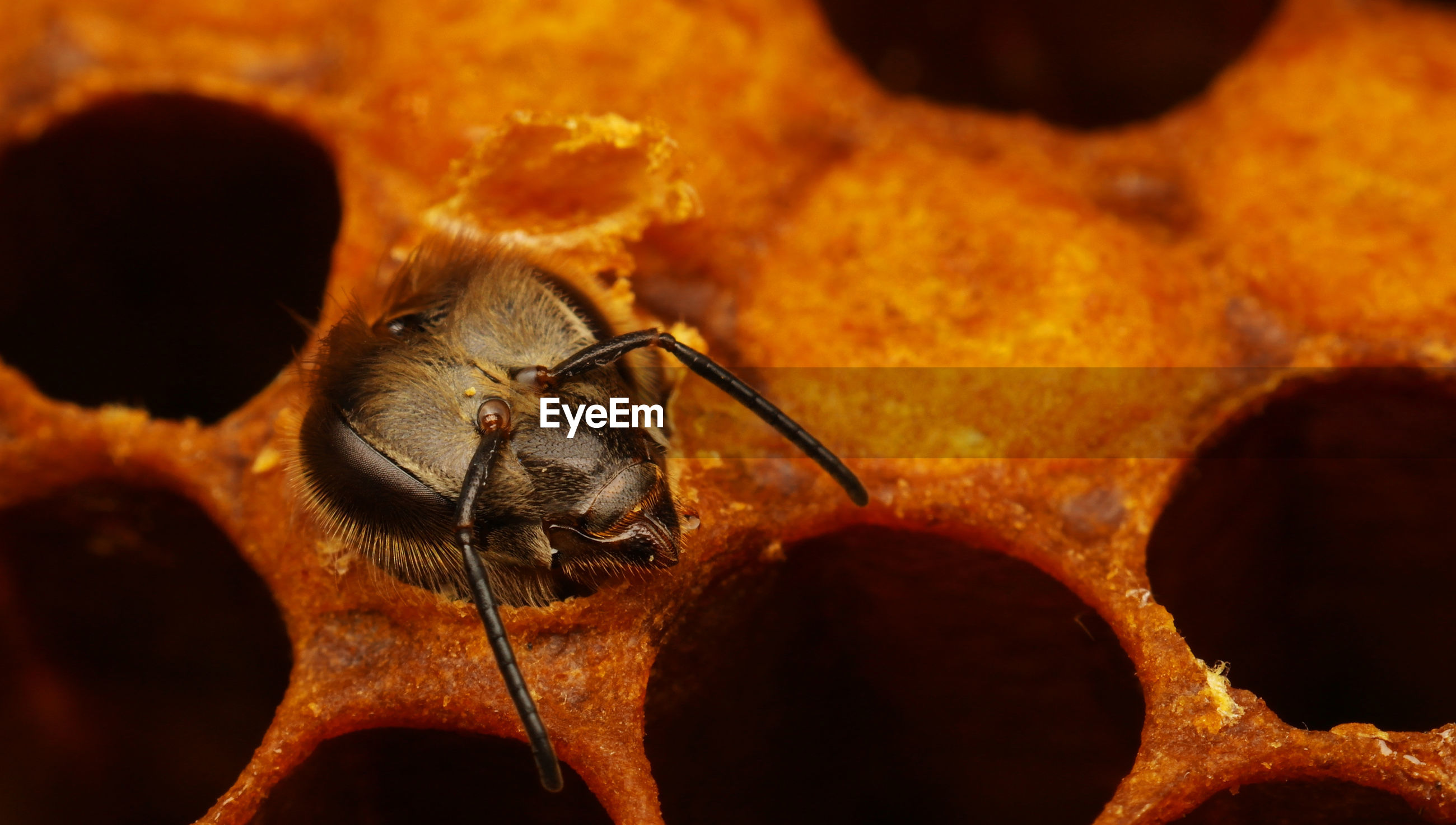 High angle view of honey bee in honeycomb