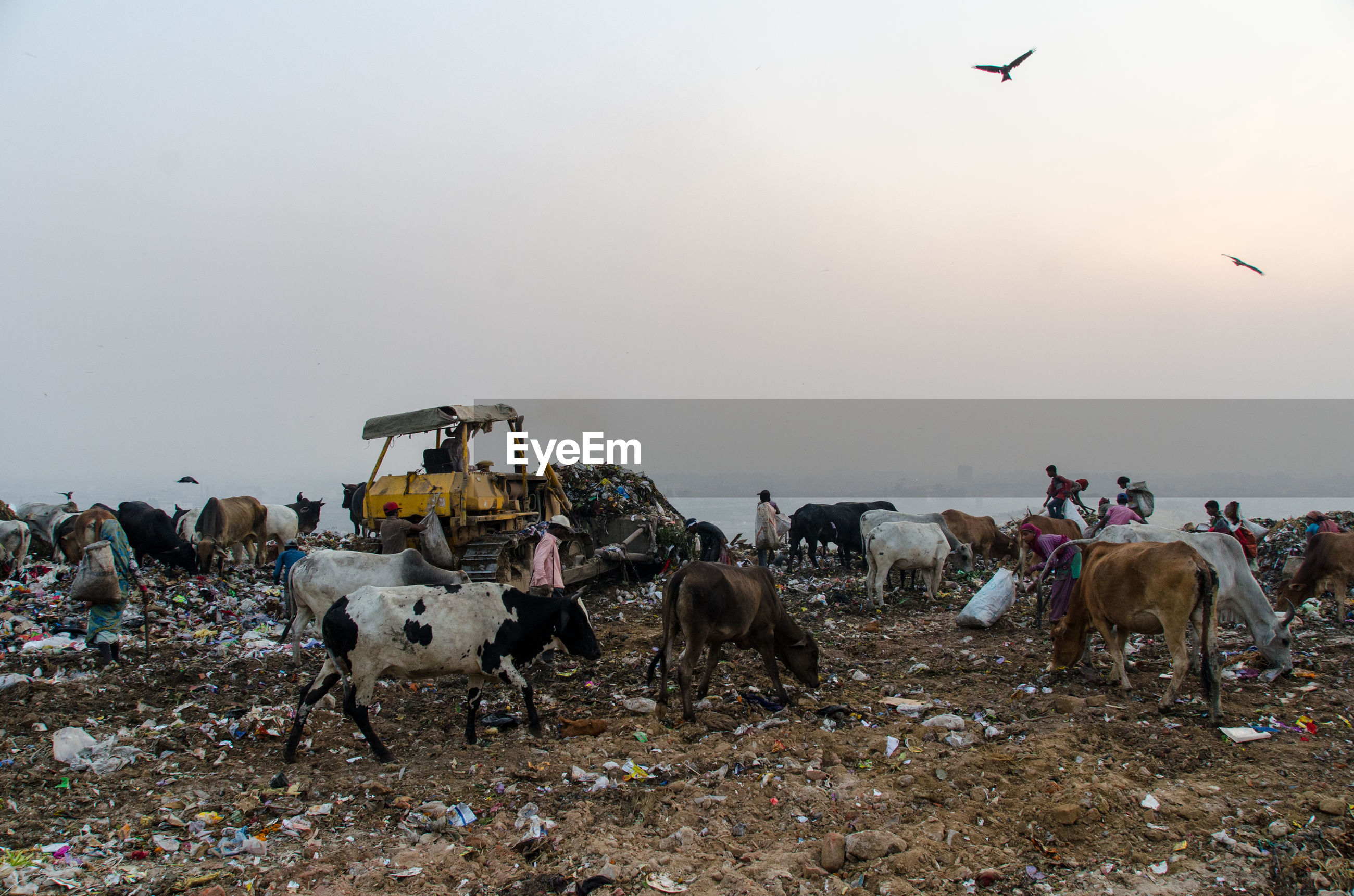 Landfill in new delhi india