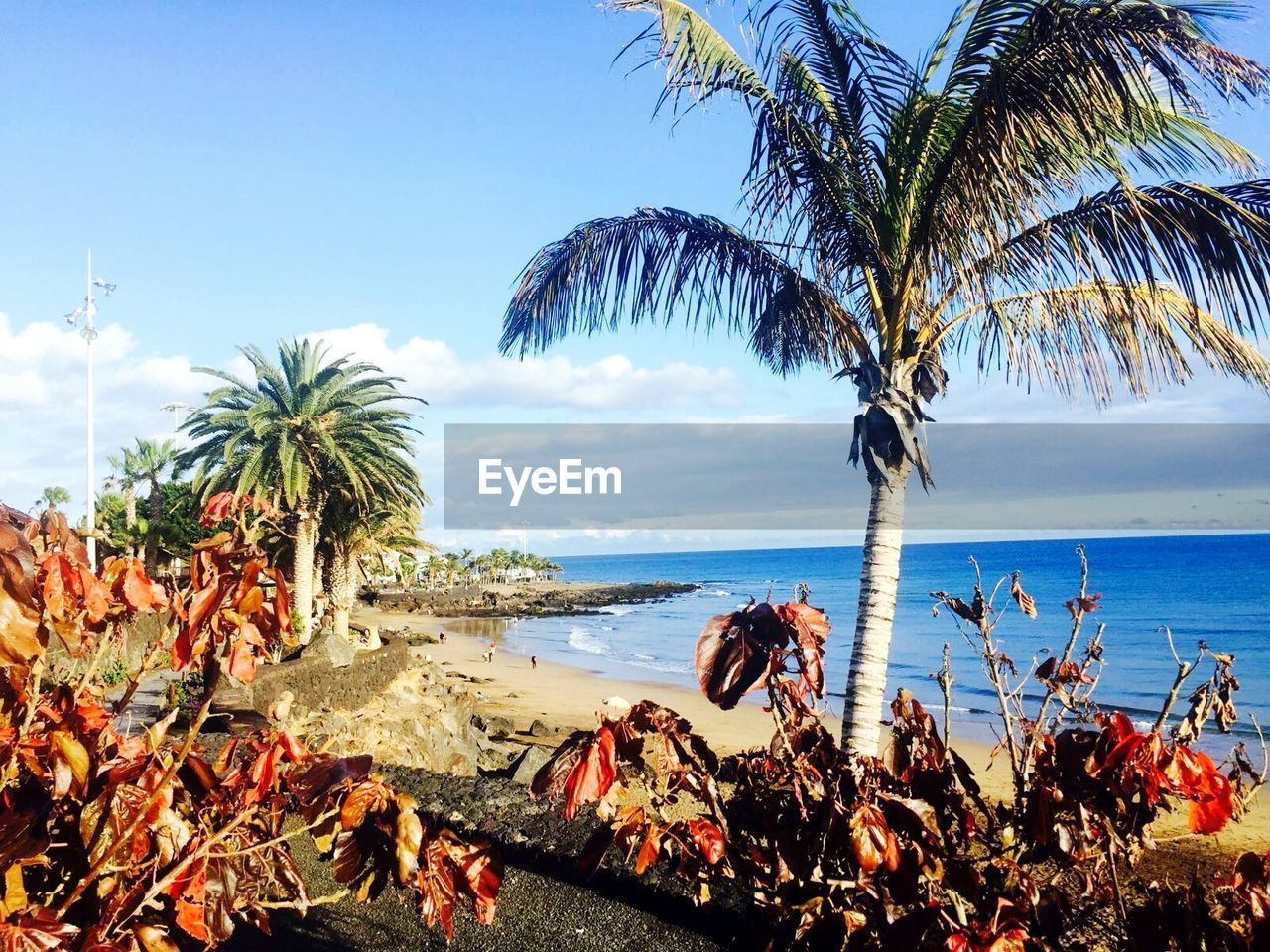 sea, palm tree, beach, tree, beauty in nature, scenics, water, nature, horizon over water, tranquil scene, tranquility, sky, growth, outdoors, day, sand, no people
