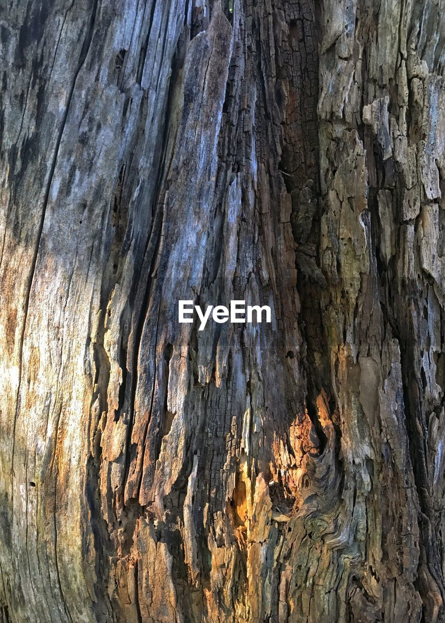 textured, tree, tree trunk, close-up, rough, nature, wood - material, no people, full frame, day, outdoors
