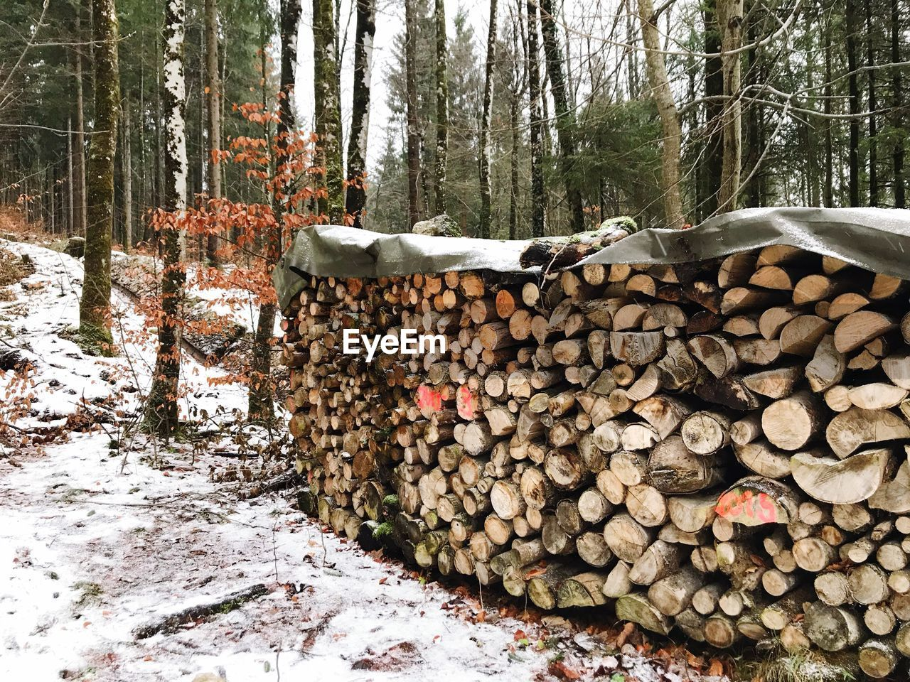 tree, forest, log, timber, firewood, stack, wood, large group of objects, deforestation, abundance, lumber industry, plant, wood - material, nature, land, winter, cold temperature, snow, day, woodpile, no people, outdoors, woodland