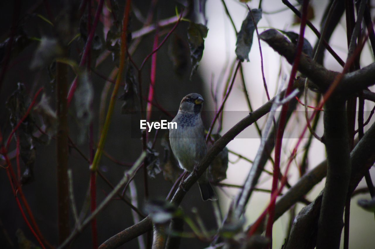 bird, animals in the wild, perching, one animal, animal themes, no people, branch, nature, animal wildlife, day, outdoors, close-up