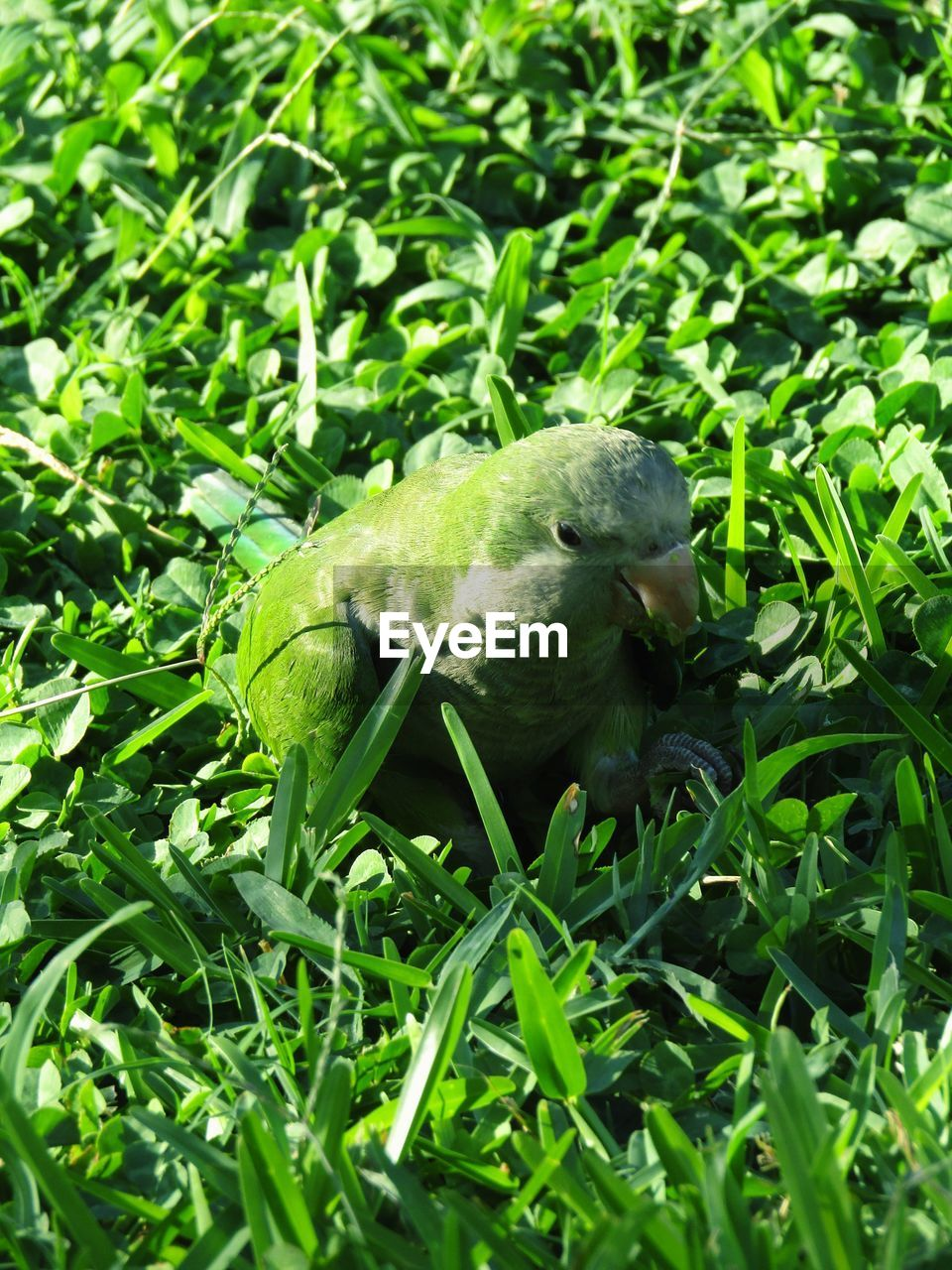 one animal, green color, animals in the wild, animal themes, grass, wildlife, growth, nature, plant, outdoors, no people, day, animal wildlife, field, leaf, bird, close-up, mammal