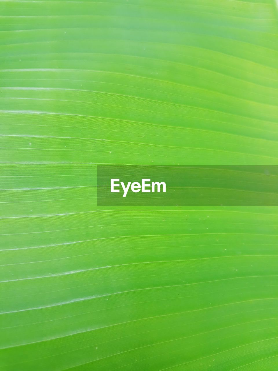 green color, leaf, plant part, full frame, backgrounds, pattern, close-up, no people, nature, natural pattern, plant, textured, beauty in nature, growth, leaf vein, palm leaf, day, banana leaf, leaves, outdoors, purity
