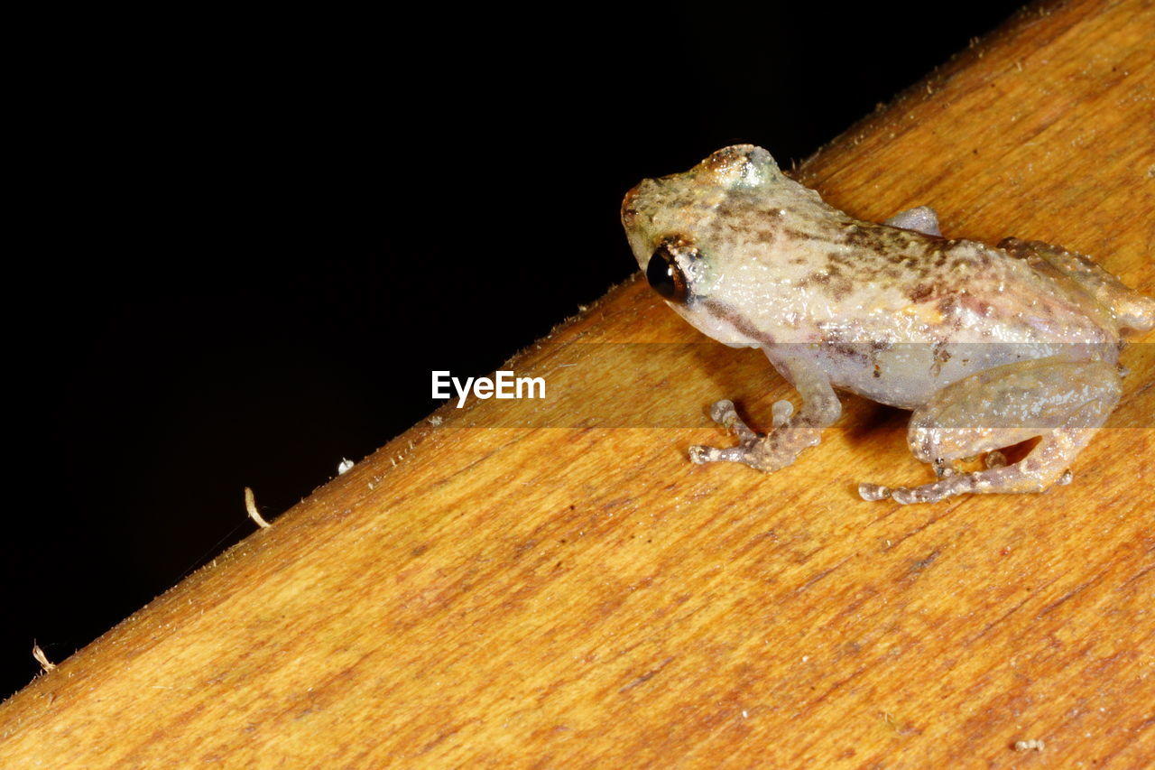 High angle view of frog on wooden table