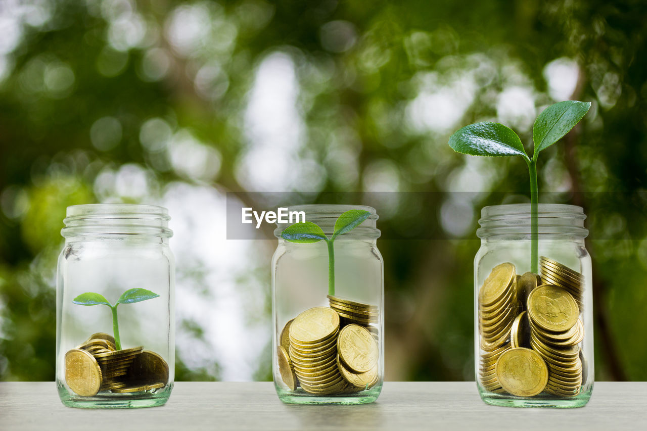 focus on foreground, green color, transparent, glass - material, jar, container, table, no people, close-up, coin, still life, growth, plant, nature, savings, wealth, day, business, tree, finance, glass
