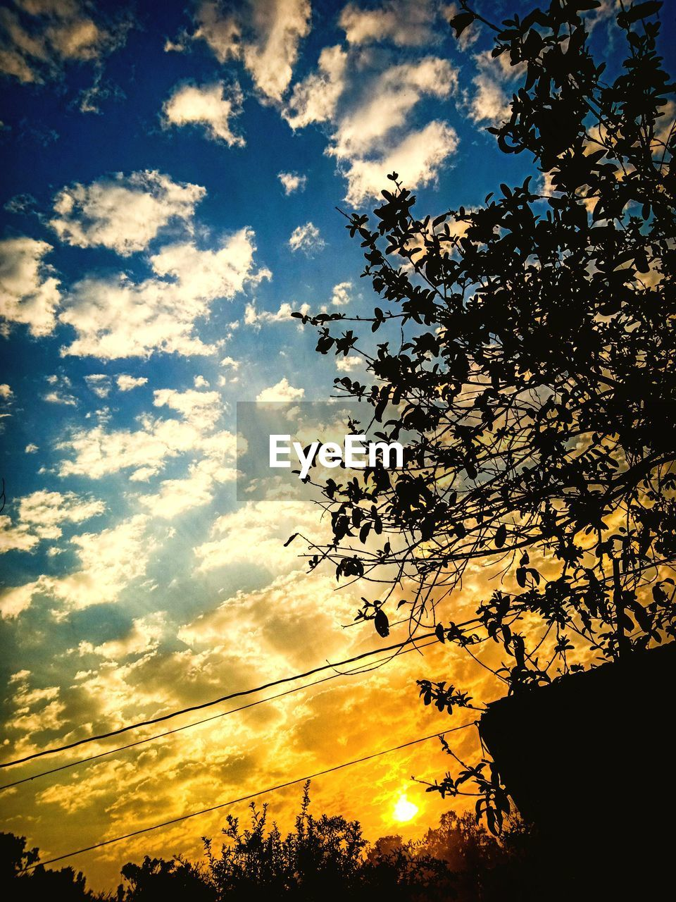 sky, cloud - sky, sunset, silhouette, beauty in nature, low angle view, tree, plant, nature, tranquility, no people, scenics - nature, orange color, sunlight, outdoors, tranquil scene, branch, idyllic, growth, yellow