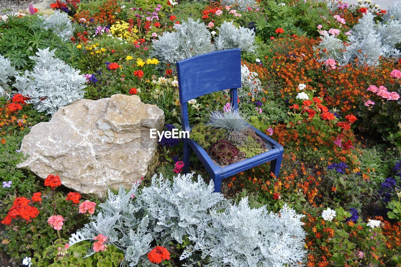flower, flowering plant, plant, growth, nature, no people, beauty in nature, freshness, high angle view, day, fragility, vulnerability, multi colored, solid, outdoors, rock, petal, potted plant, garden, close-up, flower head, flowerbed, flower pot, bouquet, flower arrangement