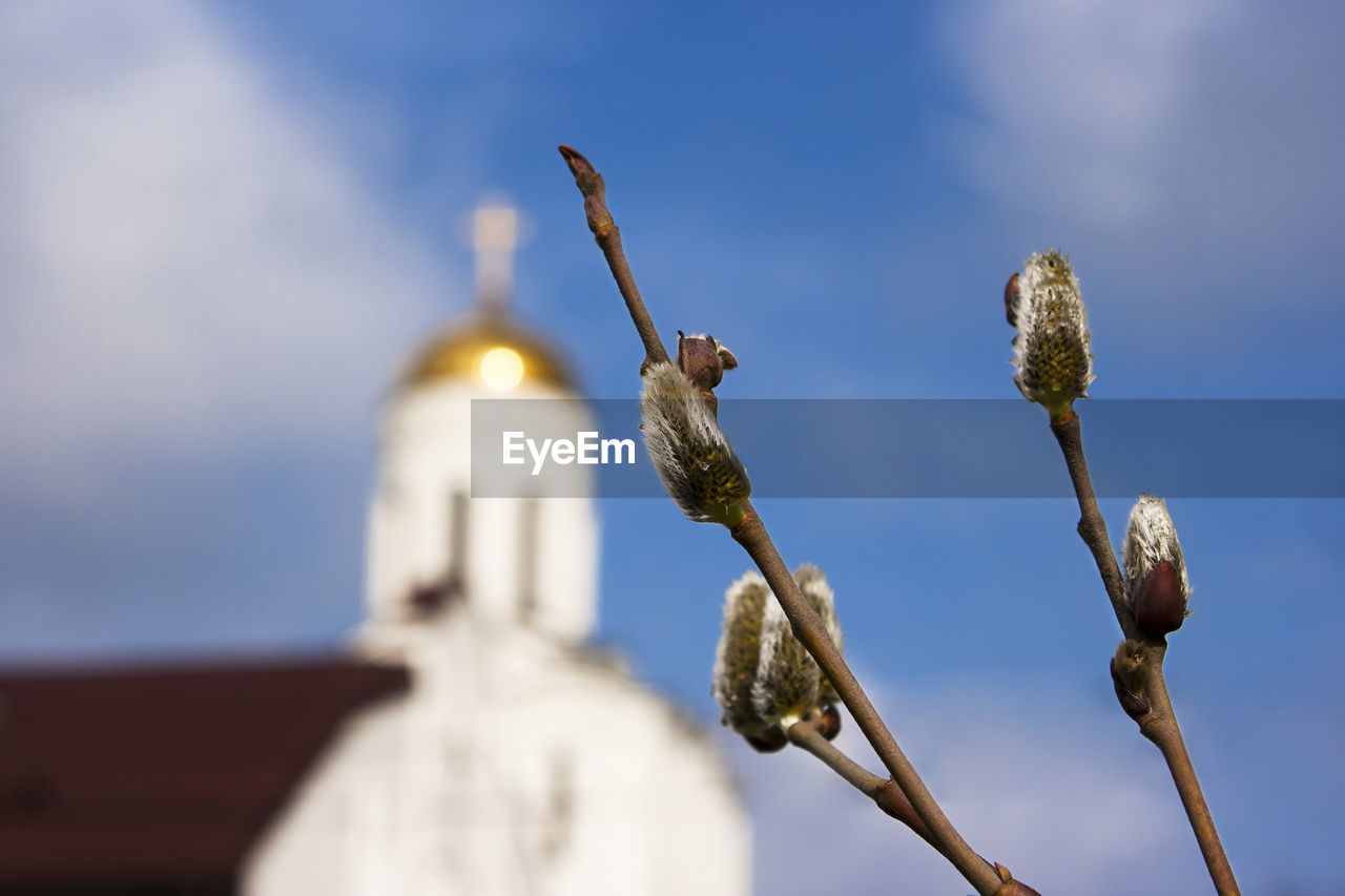 sky, low angle view, architecture, built structure, no people, building exterior, focus on foreground, nature, sunlight, day, selective focus, plant, building, close-up, outdoors, place of worship, belief, blue, religion, cloud - sky