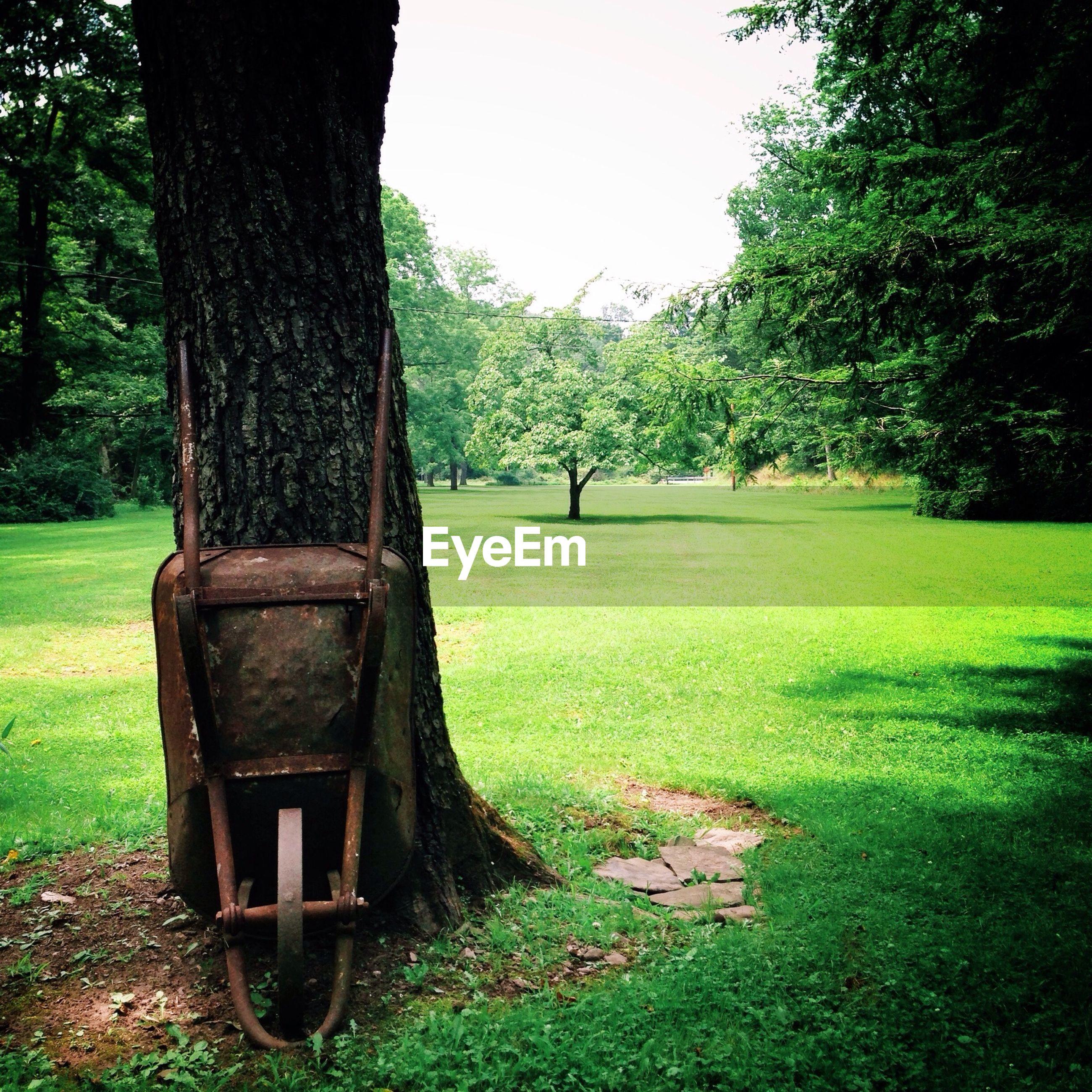 Wheelbarrow against tree in park