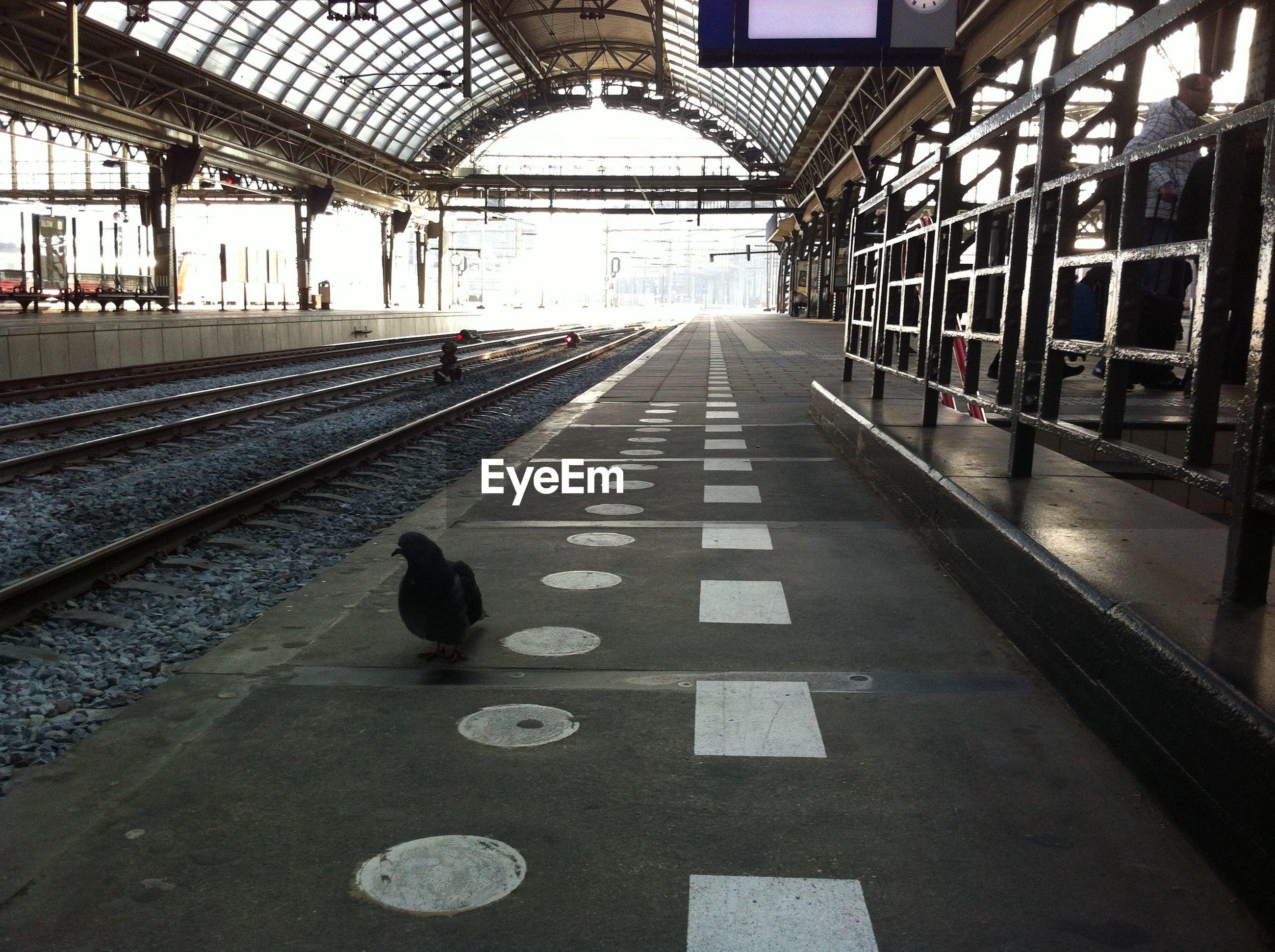High angle view of bird walking at railroad station platform