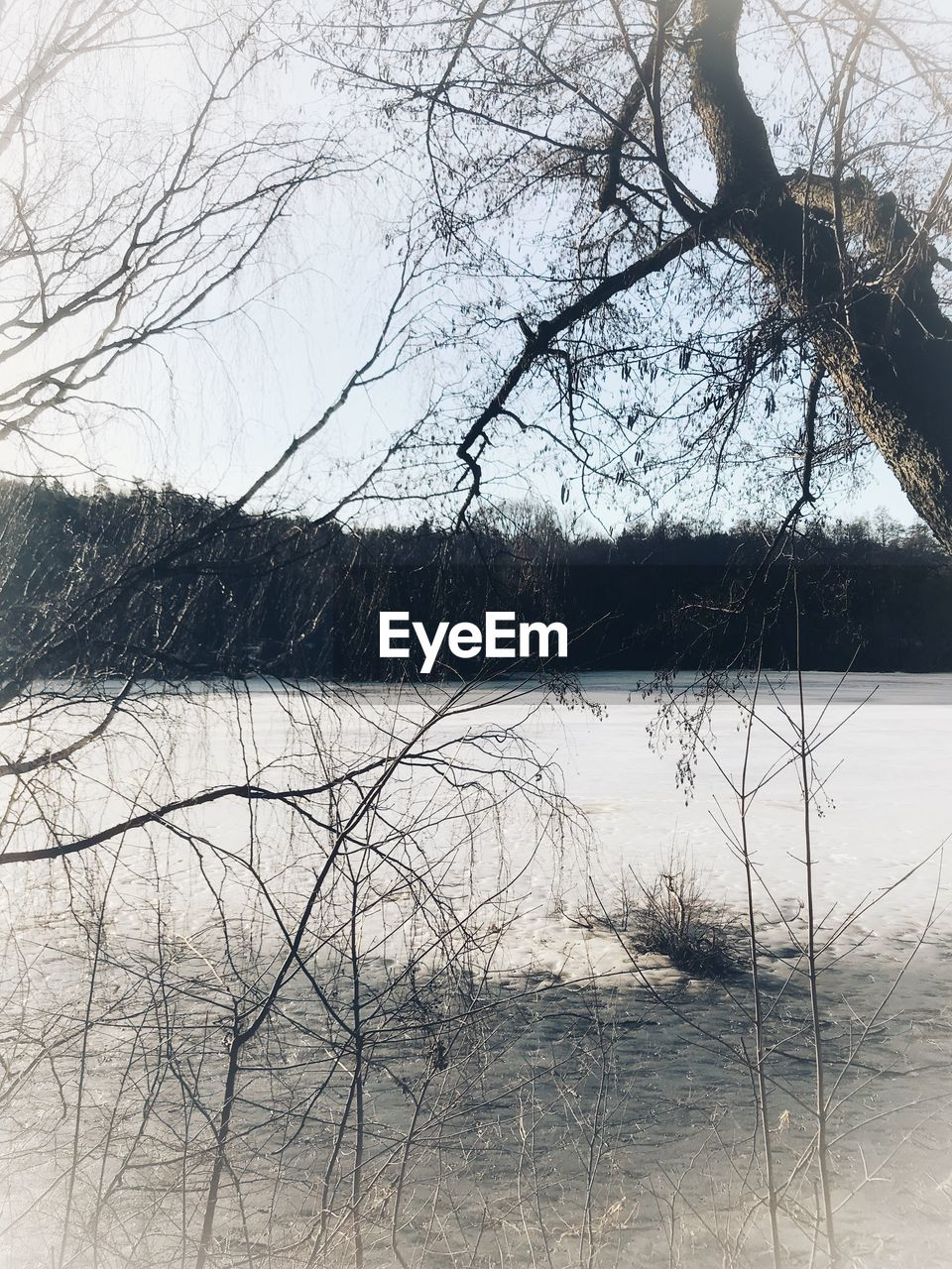 tree, bare tree, plant, water, tranquility, winter, no people, cold temperature, snow, lake, branch, tranquil scene, nature, beauty in nature, sky, scenics - nature, day, non-urban scene, outdoors