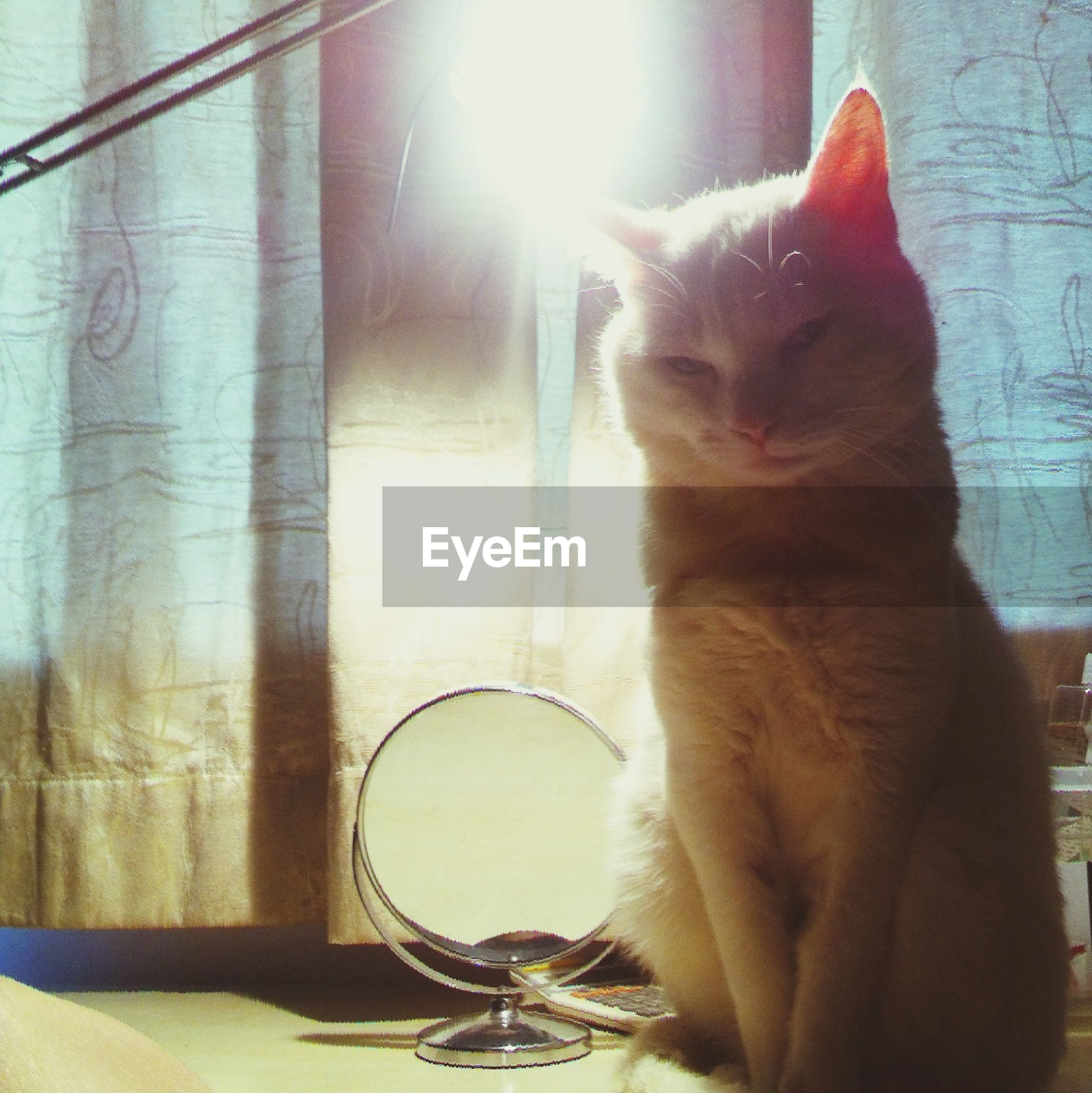domestic cat, cat, one animal, domestic animals, animal themes, pets, mammal, feline, indoors, whisker, sitting, sunlight, relaxation, home interior, no people, close-up, window, day, table, lens flare