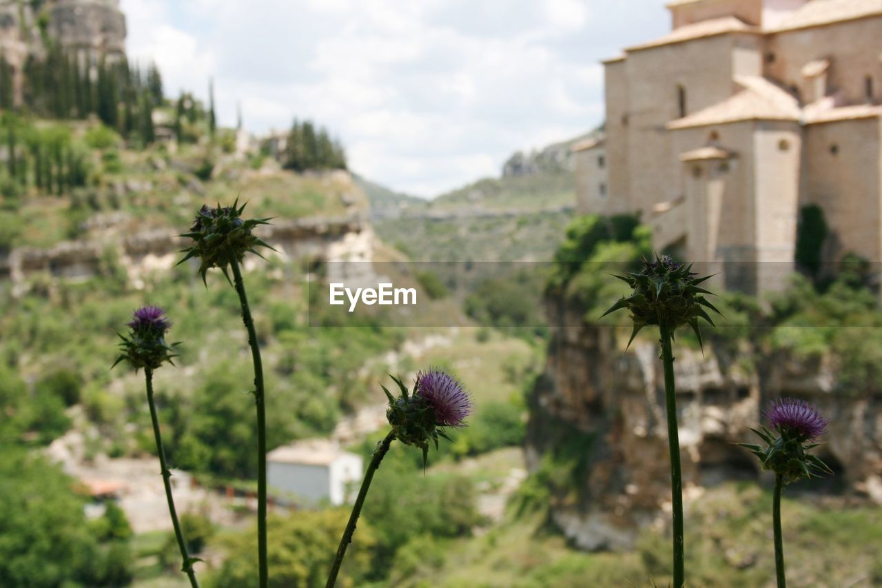 flower, focus on foreground, nature, growth, fragility, plant, architecture, no people, day, freshness, field, beauty in nature, outdoors, built structure, flower head, sky, blooming, close-up