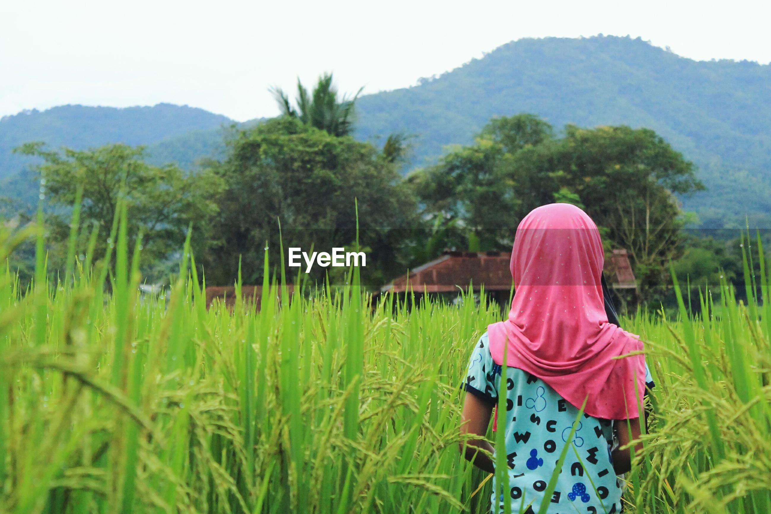 Rear view of girl standing amidst plants