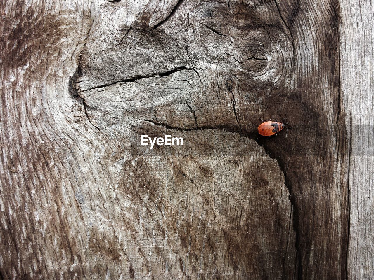 wood - material, textured, red, day, no people, close-up, food, tree, food and drink, tree trunk, trunk, outdoors, rough, brown, directly above, plant, ladybug, insect, fruit, invertebrate