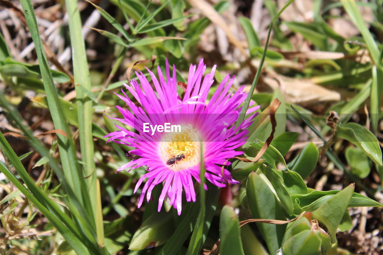 flower, nature, growth, fragility, beauty in nature, petal, flower head, freshness, plant, blooming, no people, outdoors, close-up, day