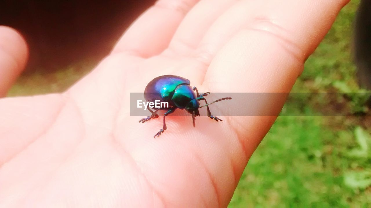 human hand, human body part, one person, real people, human finger, unrecognizable person, holding, one animal, animals in the wild, animal themes, leisure activity, lifestyles, insect, close-up, day, outdoors, tiny, nature, ladybug, people
