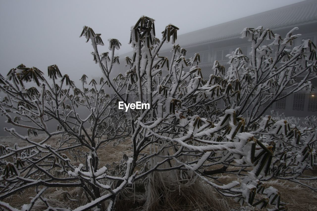 Close-Up Of Frozen Plants During Foggy Weather