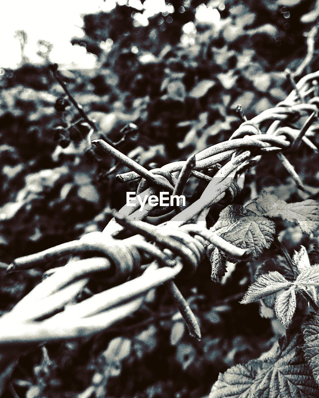 no people, rope, close-up, day, selective focus, plant, tree, strength, nature, connection, tied up, focus on foreground, outdoors, metal, tangled, twisted, sunlight, growth, full frame, complexity