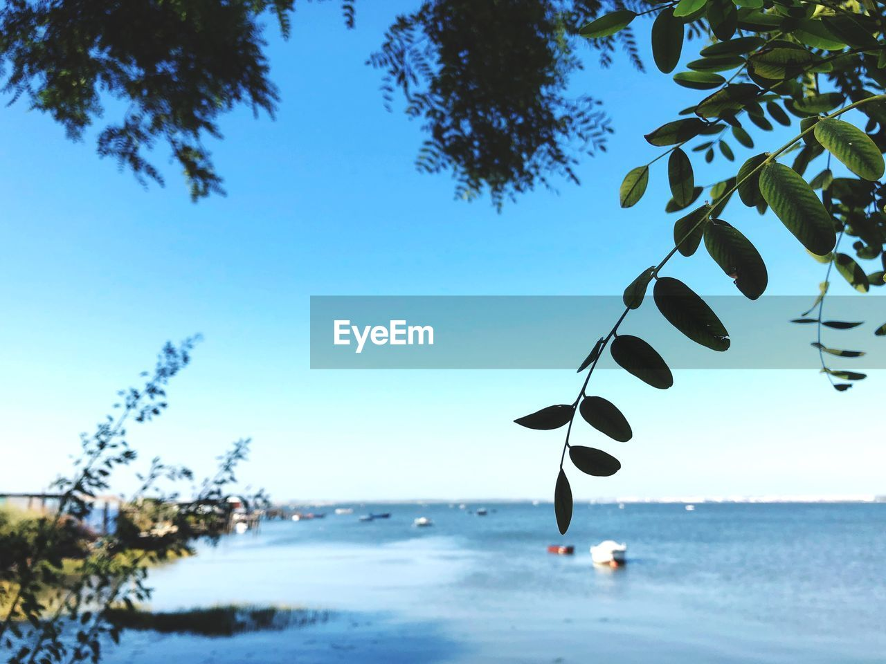 sky, tree, plant, water, nature, beauty in nature, blue, day, clear sky, land, sea, tranquility, no people, growth, scenics - nature, beach, tranquil scene, outdoors, focus on foreground