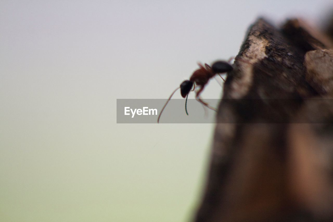 animals in the wild, invertebrate, insect, animal themes, one animal, animal, animal wildlife, selective focus, close-up, no people, nature, day, copy space, outdoors, zoology, sky, arthropod, fly, animal wing, animal body part