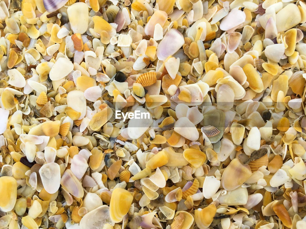 large group of objects, full frame, backgrounds, abundance, yellow, no people, close-up, shell, freshness, indoors, food and drink, food, still life, animal shell, animal wildlife, seashell, day, high angle view, corn, ingredient, snack