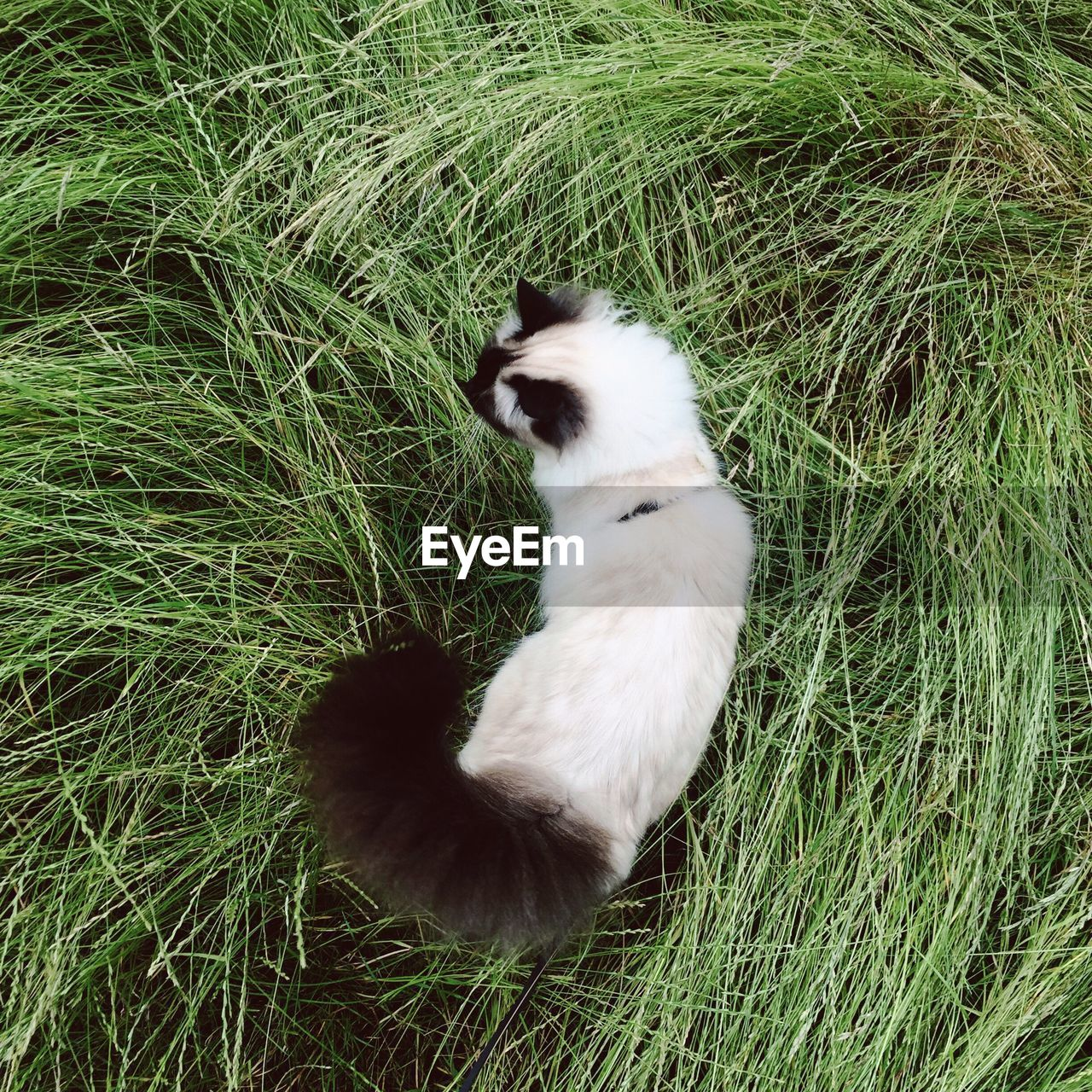 grass, domestic cat, cat, animal themes, one animal, domestic animals, pets, feline, mammal, field, no people, sitting, nature, day, outdoors