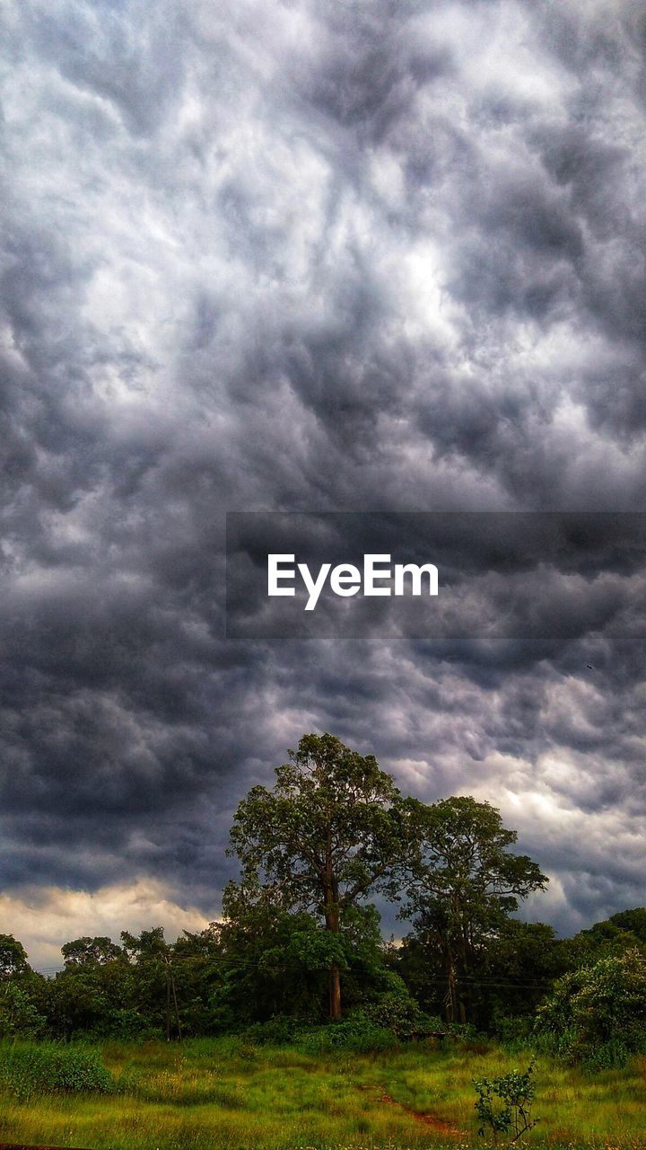TREES GROWING ON FIELD AGAINST STORM CLOUDS