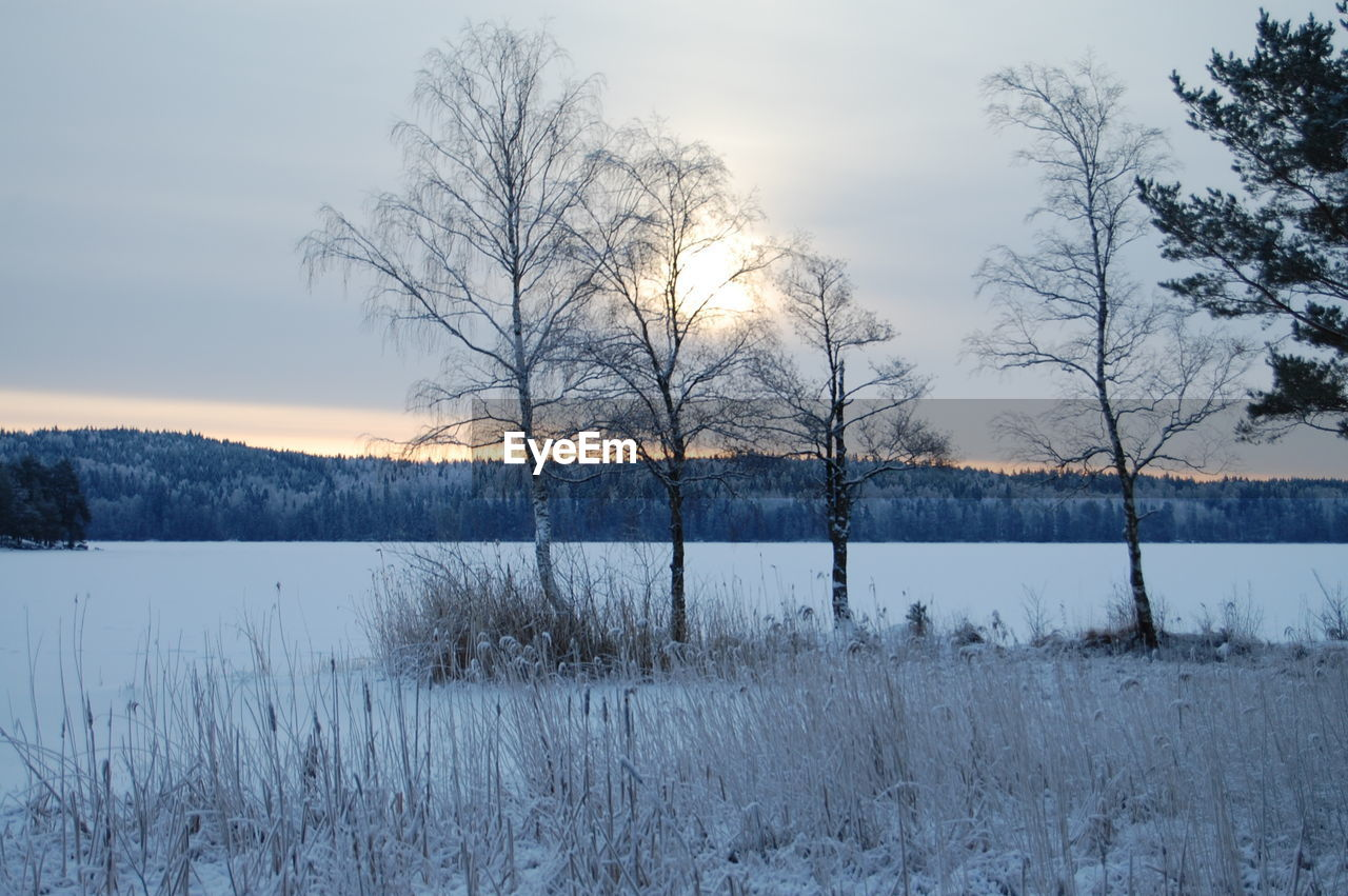 cold temperature, winter, nature, snow, bare tree, beauty in nature, tranquility, tranquil scene, scenics, tree, no people, outdoors, landscape, lake, field, sky, day, water, grass