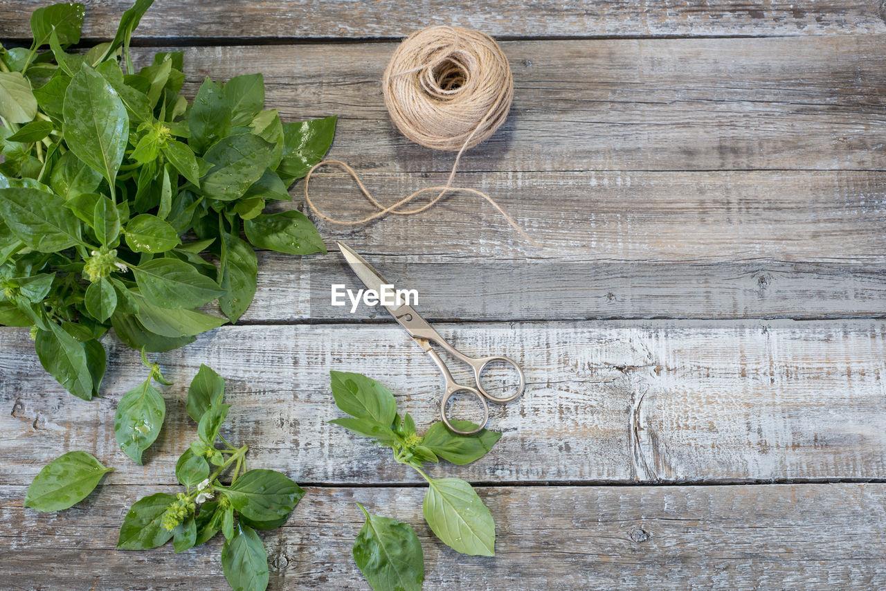 High angle view of leaves with scissor and rope on table