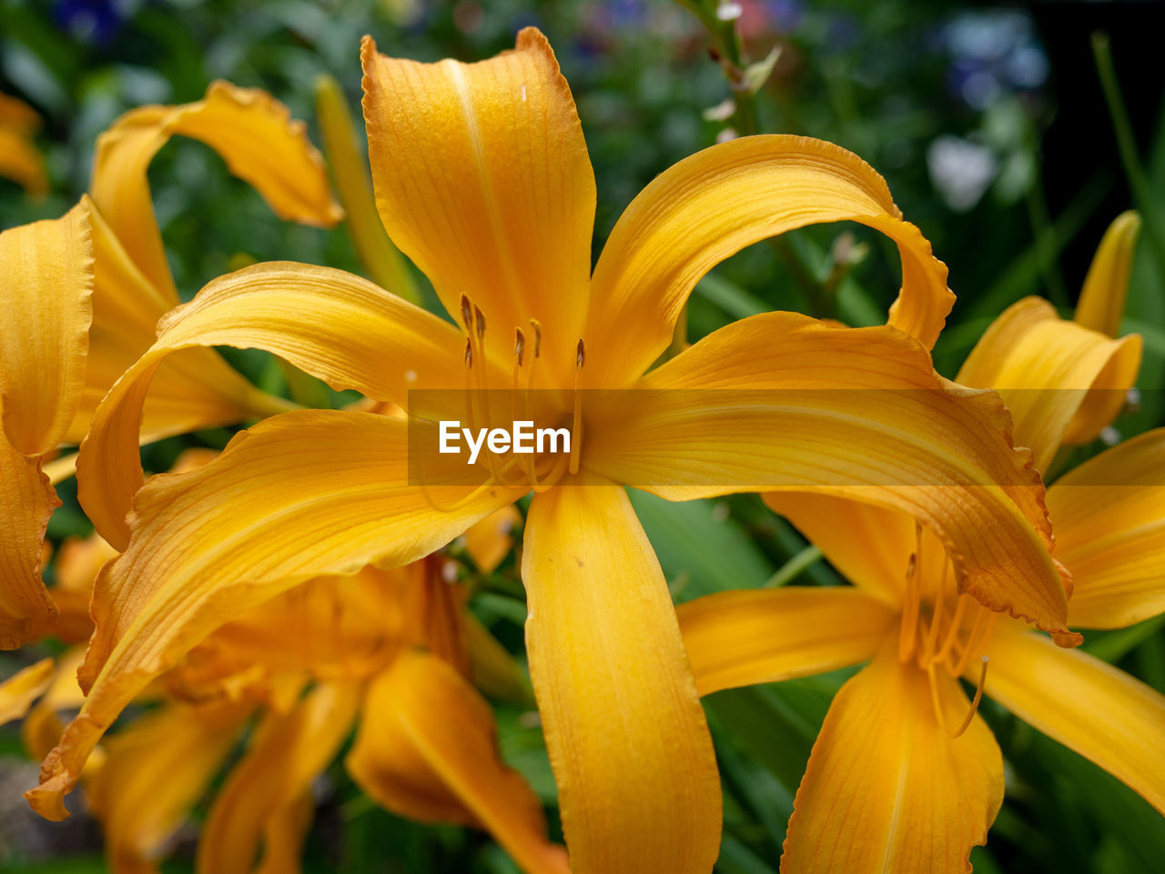 flowering plant, flower, yellow, petal, vulnerability, beauty in nature, fragility, plant, flower head, close-up, inflorescence, freshness, growth, focus on foreground, pollen, no people, lily, day lily, day, botany