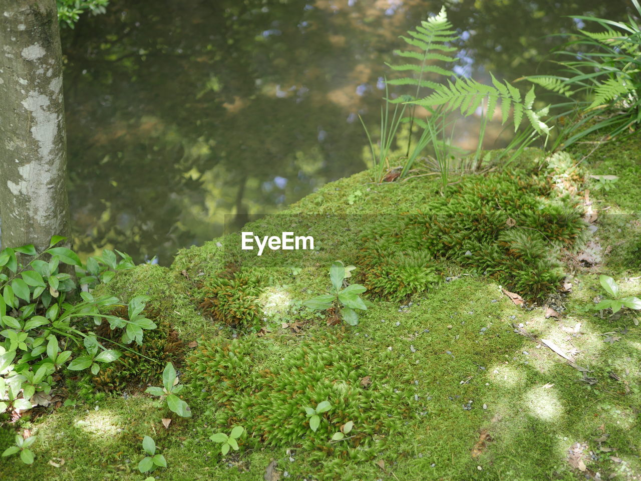 plant, growth, green color, nature, no people, day, water, tree, tranquility, beauty in nature, focus on foreground, moss, outdoors, selective focus, close-up, leaf, land, plant part, grass