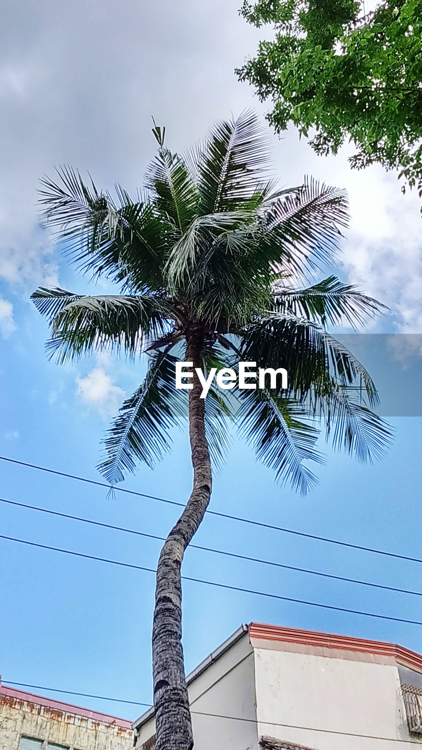 tree, low angle view, sky, palm tree, tree trunk, branch, growth, nature, cloud - sky, built structure, cloud, building exterior, architecture, day, no people, outdoors, tall - high, tranquility, beauty in nature, leaf