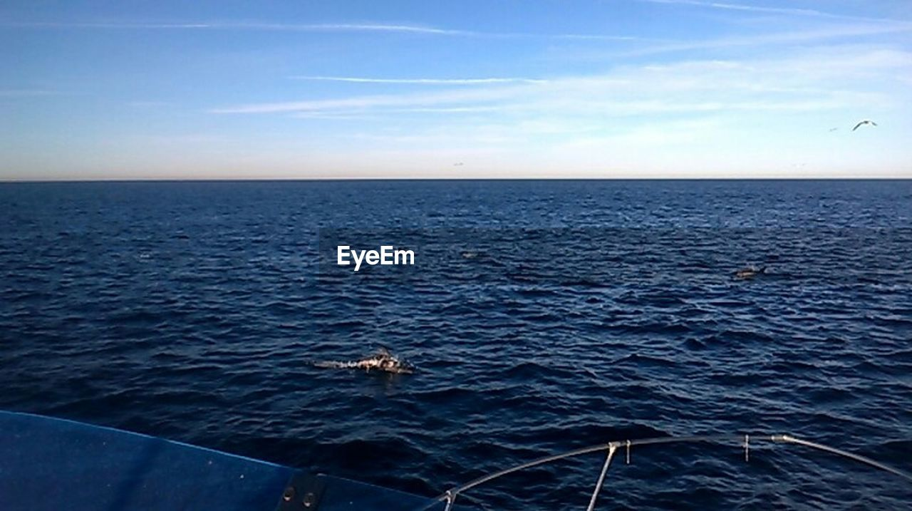 sea, horizon over water, water, nature, no people, animals in the wild, animal wildlife, animal themes, one animal, outdoors, sky, sea life, tranquility, day, scenics, beauty in nature, swimming, horizon, mammal