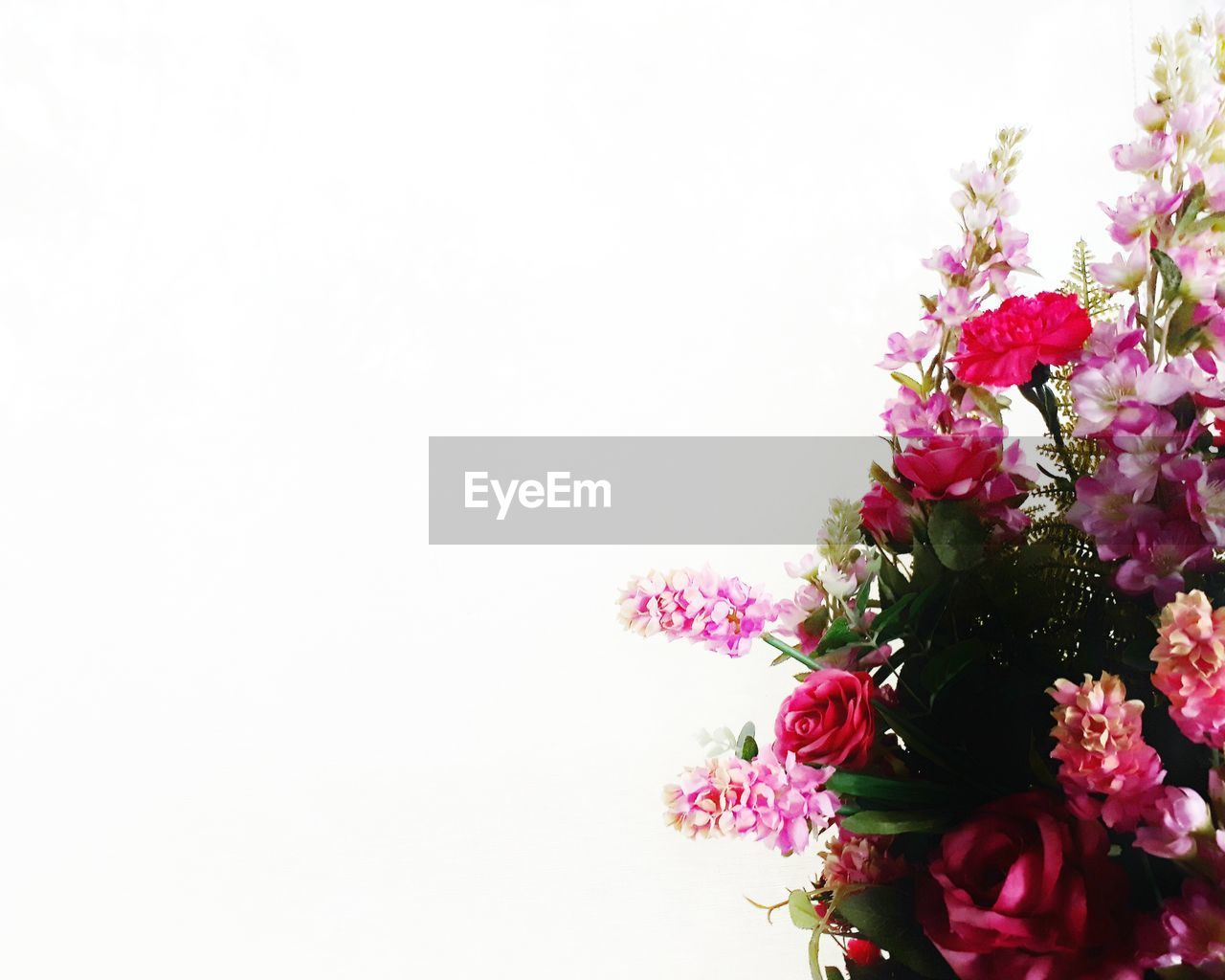 flowering plant, flower, freshness, vulnerability, plant, fragility, beauty in nature, studio shot, petal, copy space, close-up, flower head, pink color, nature, indoors, white background, inflorescence, flower arrangement, no people, bouquet, purple, bunch of flowers