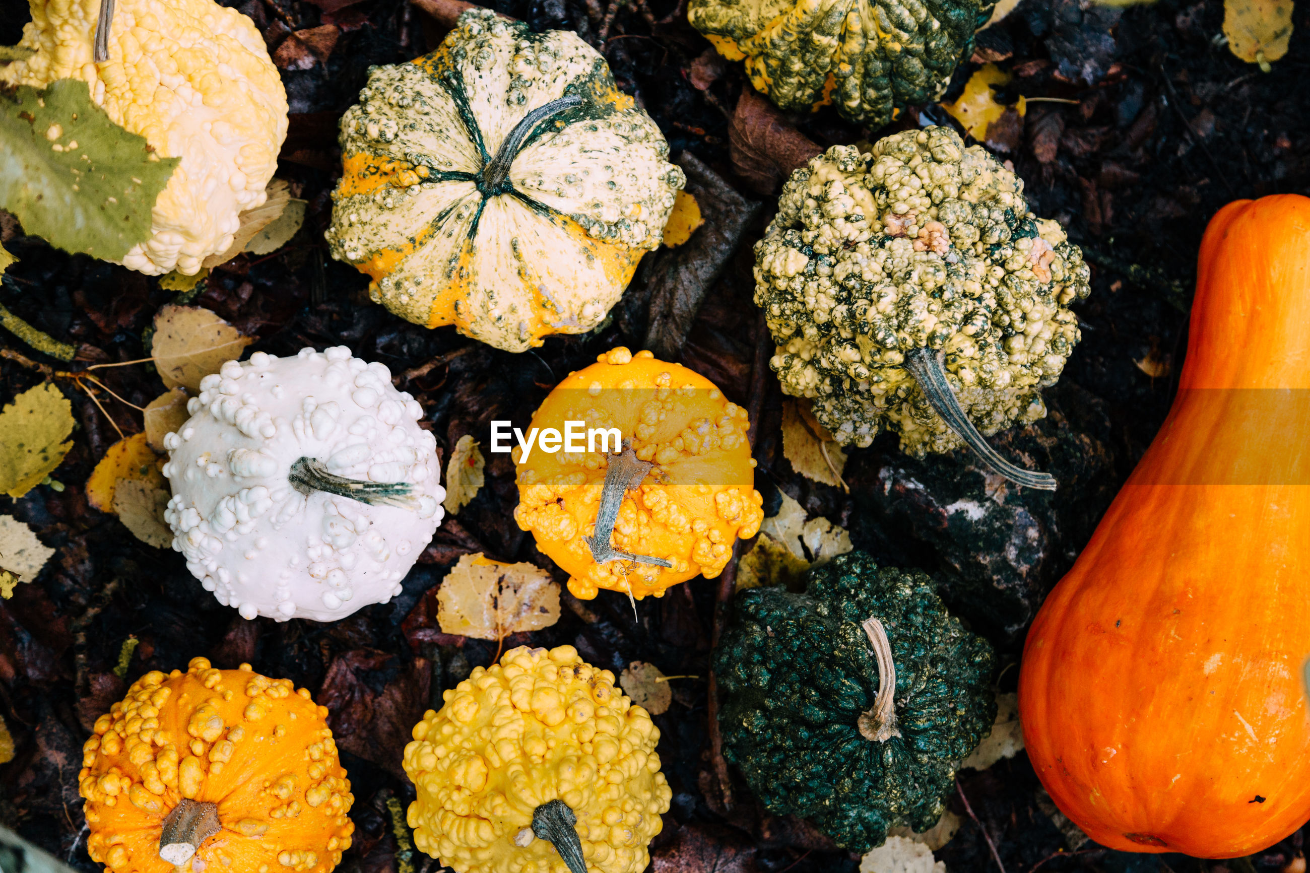 High angle view of pumpkins on field in forest during halloween