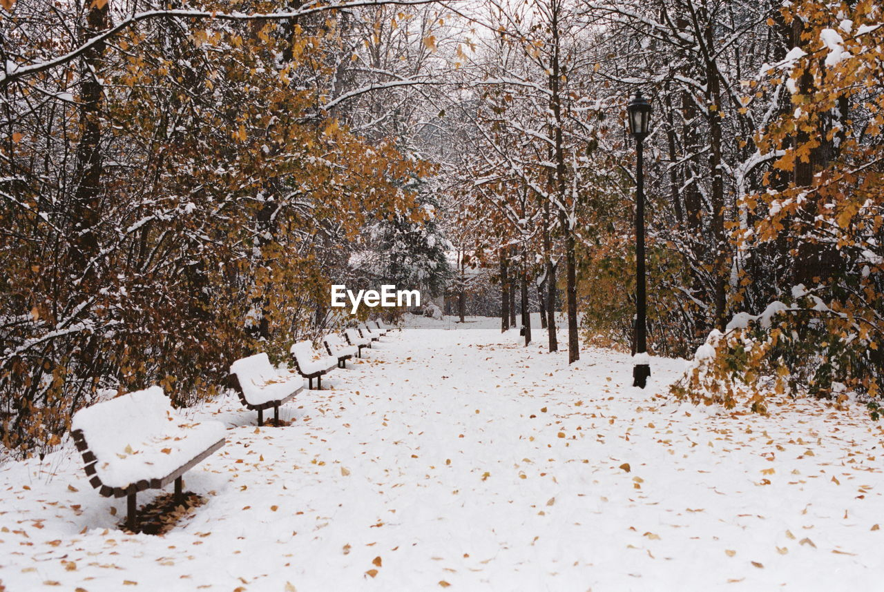 snow, cold temperature, winter, tree, plant, nature, white color, land, scenics - nature, landscape, tranquility, beauty in nature, no people, tranquil scene, direction, environment, covering, forest, the way forward, diminishing perspective, snowing, treelined, outdoors, woodland, blizzard, extreme weather, change