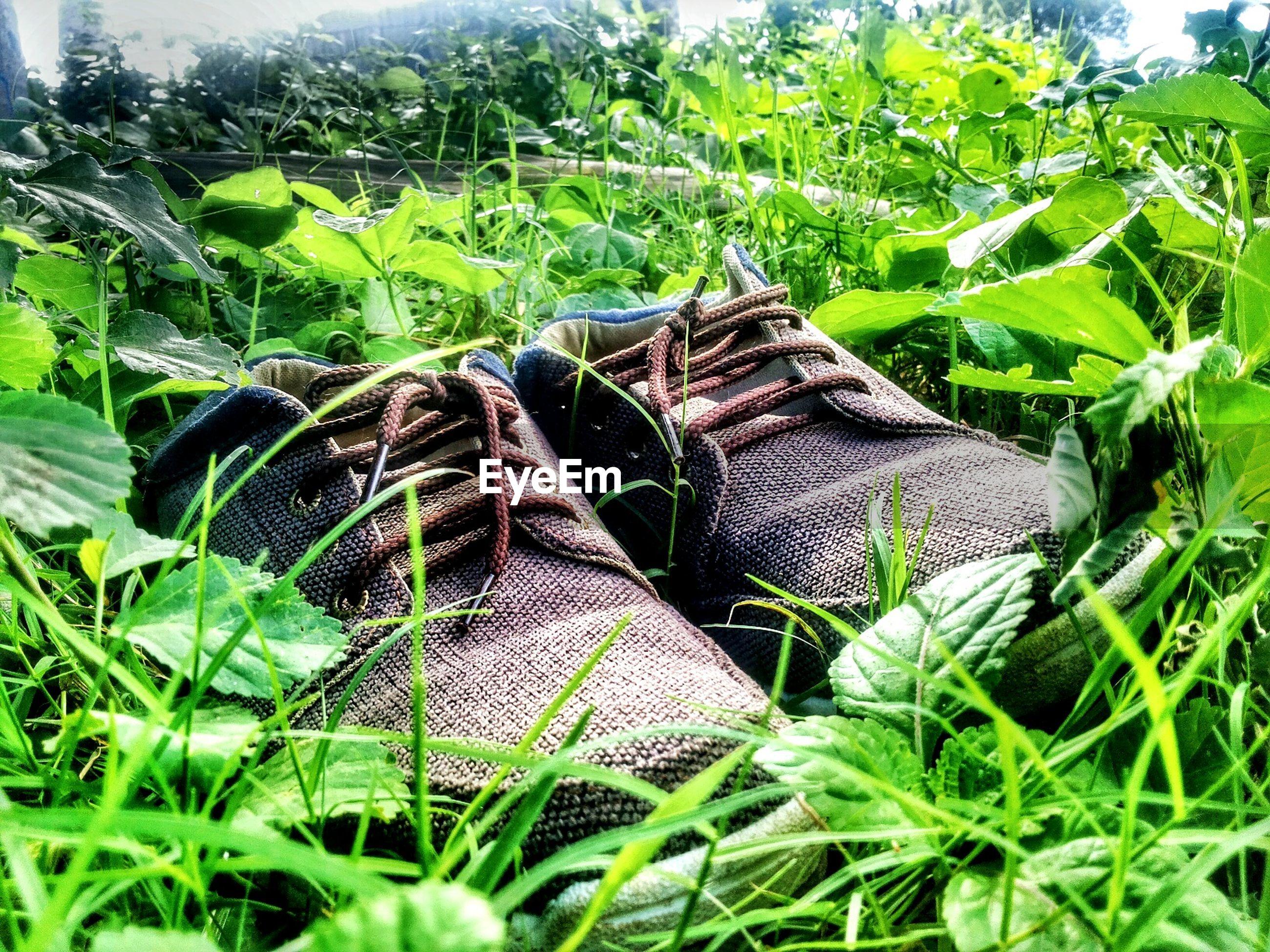 Pair of shoes on grassy field