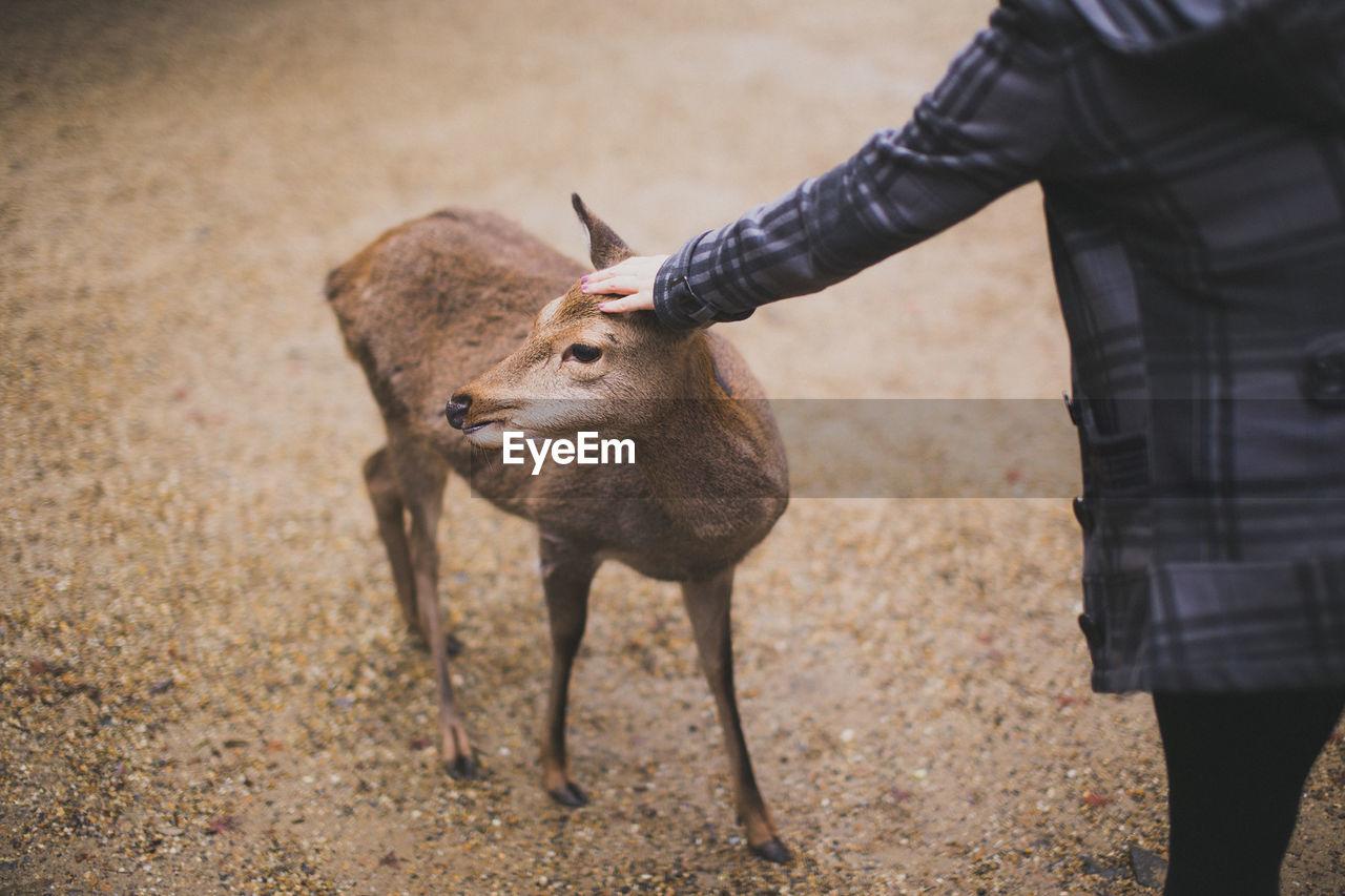 View Of Deer Against Dirt Road