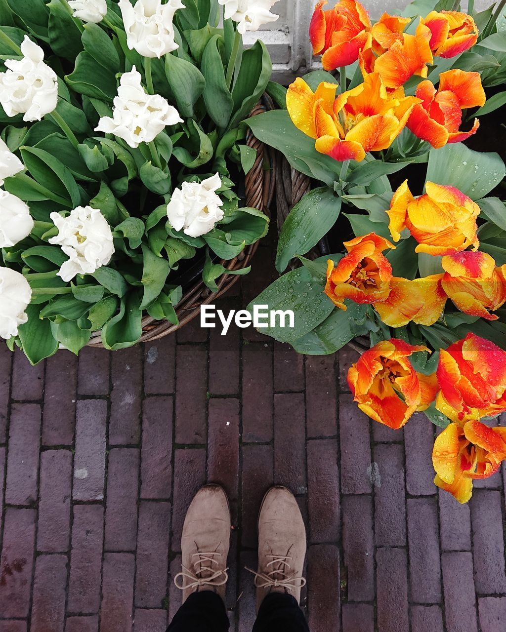 low section, flower, flowering plant, real people, human leg, one person, personal perspective, body part, standing, plant, human body part, shoe, beauty in nature, freshness, nature, day, fragility, high angle view, lifestyles, vulnerability, human foot, outdoors, flower head, human limb
