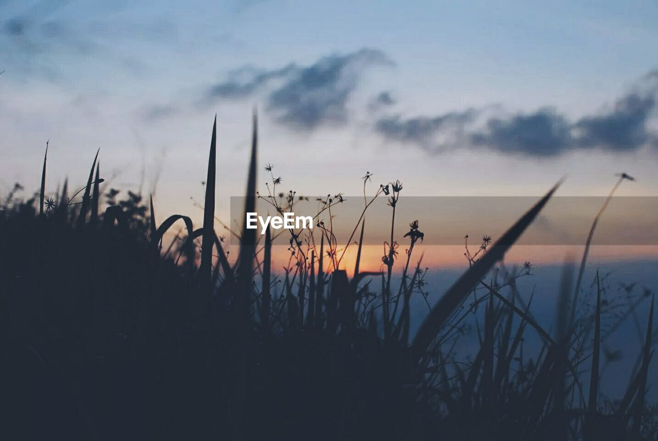 growth, nature, plant, beauty in nature, silhouette, sunset, tranquility, tranquil scene, outdoors, sky, field, no people, scenics, grass, close-up, day