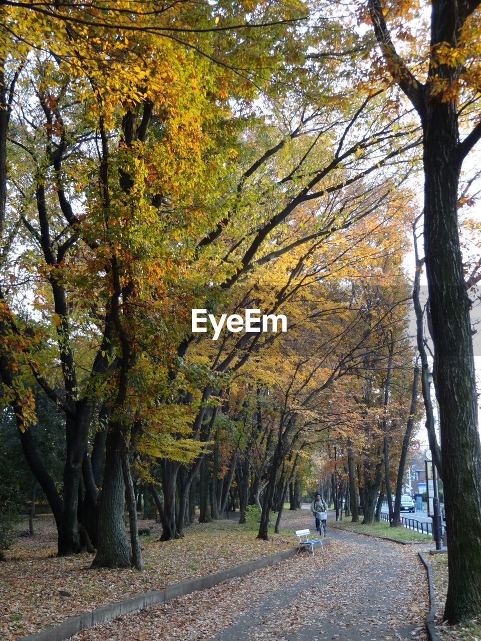 tree, autumn, change, nature, leaf, branch, tranquility, tree trunk, beauty in nature, growth, tranquil scene, outdoors, scenics, day, park - man made space, no people, sky