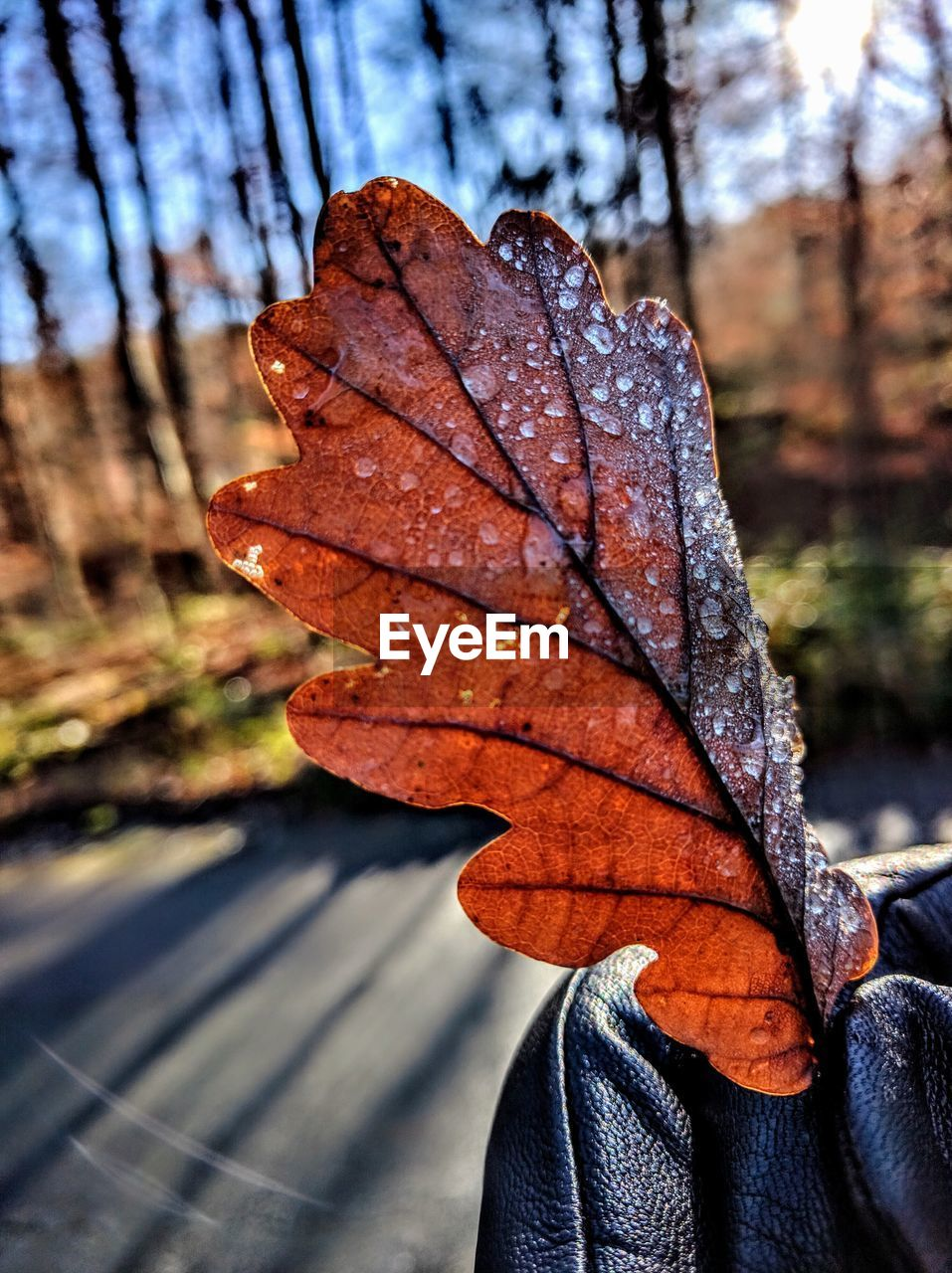 autumn, leaf, change, dry, nature, day, focus on foreground, outdoors, close-up, maple leaf, beauty in nature, maple, no people, water, tree