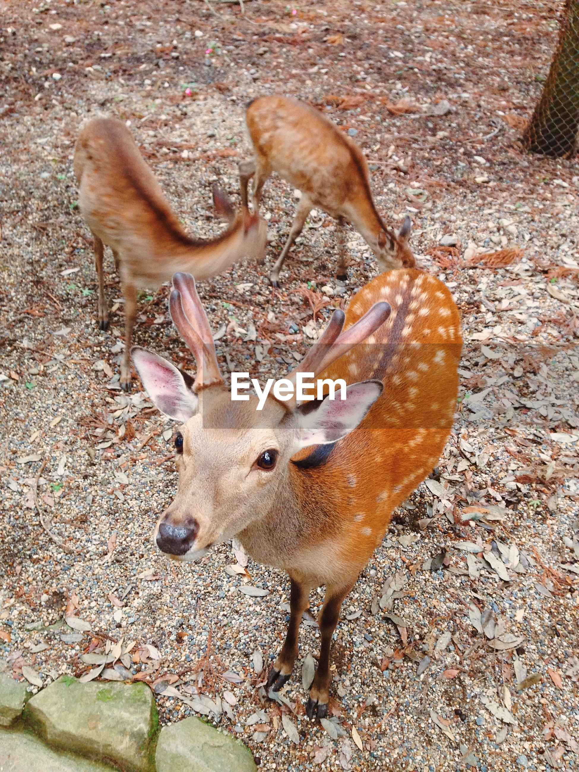 High angle view of deer in zoo