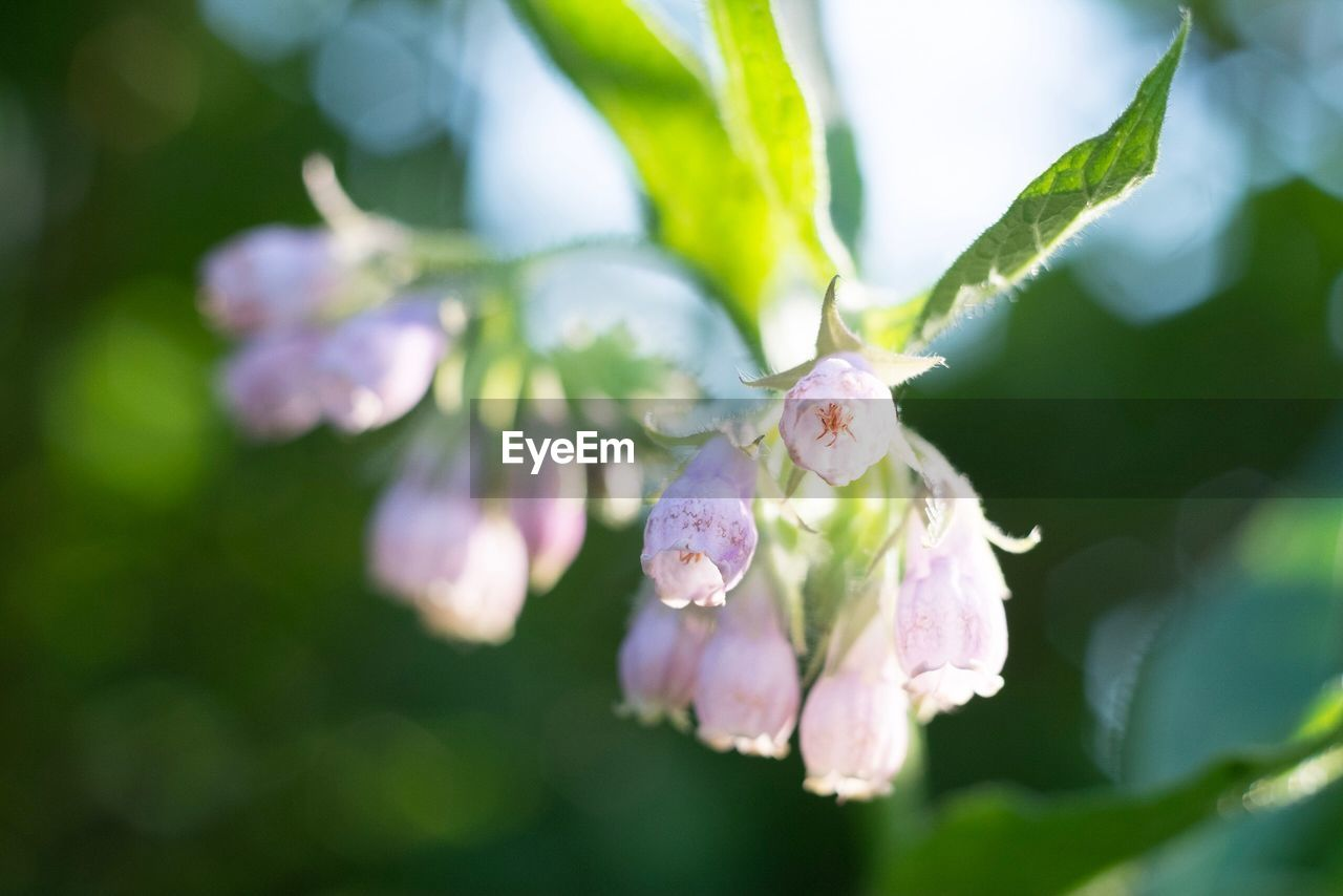 plant, flower, growth, flowering plant, beauty in nature, fragility, vulnerability, close-up, freshness, petal, selective focus, nature, no people, day, flower head, leaf, focus on foreground, inflorescence, plant part, outdoors, springtime, pollen