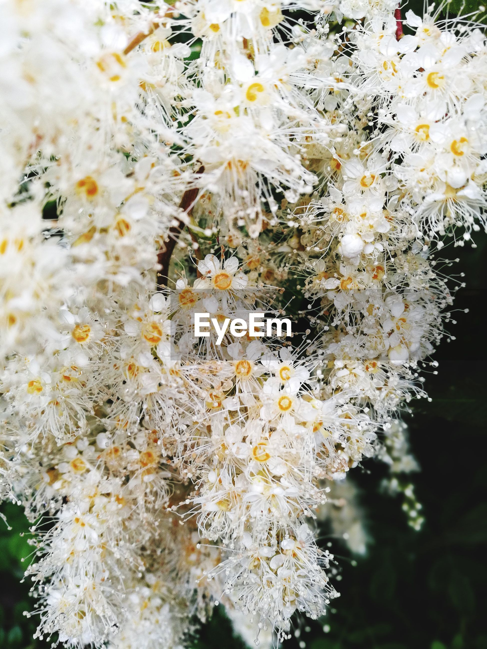 flower, white color, fragility, growth, nature, blossom, white, beauty in nature, botany, freshness, springtime, tree, close-up, no people, outdoors, day, branch, flower head
